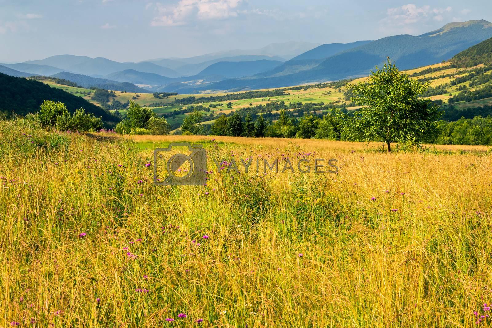 field near home at sunrise by Pellinni