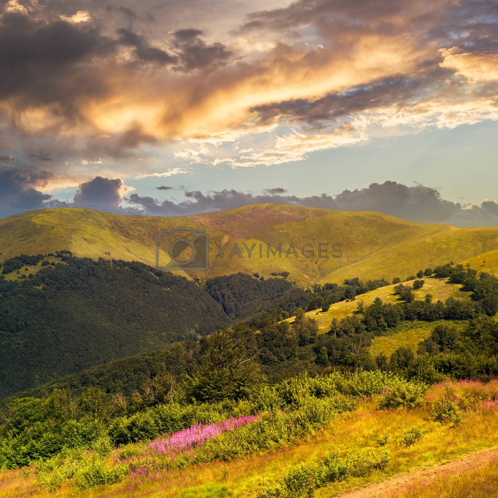 high wild plants at the mountain top at sunset by Pellinni