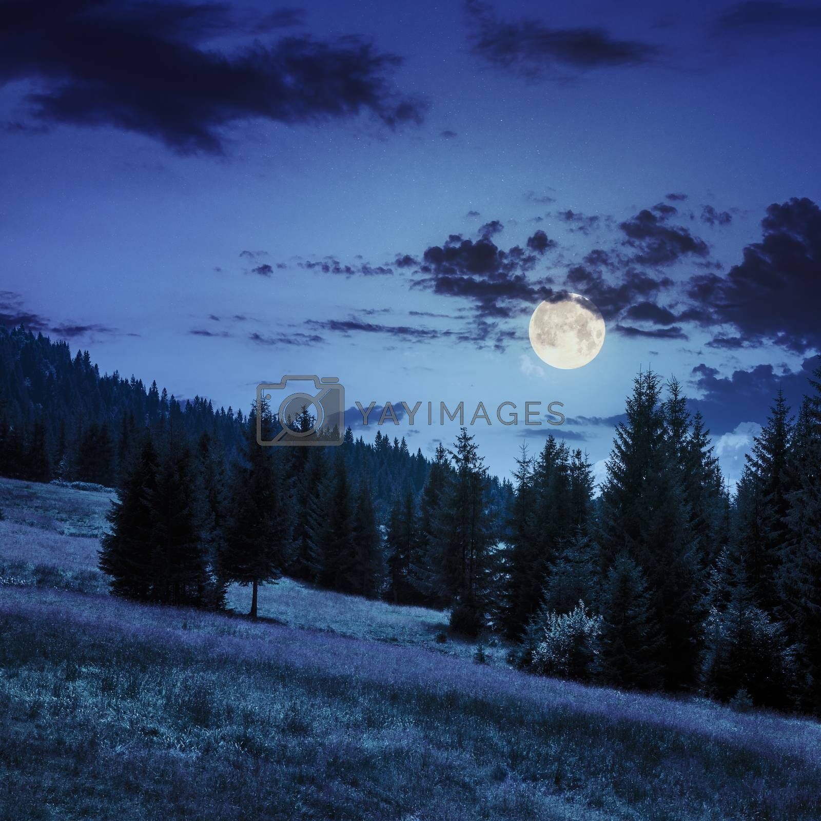 coniferous forest on a  mountain slope in moon light by Pellinni