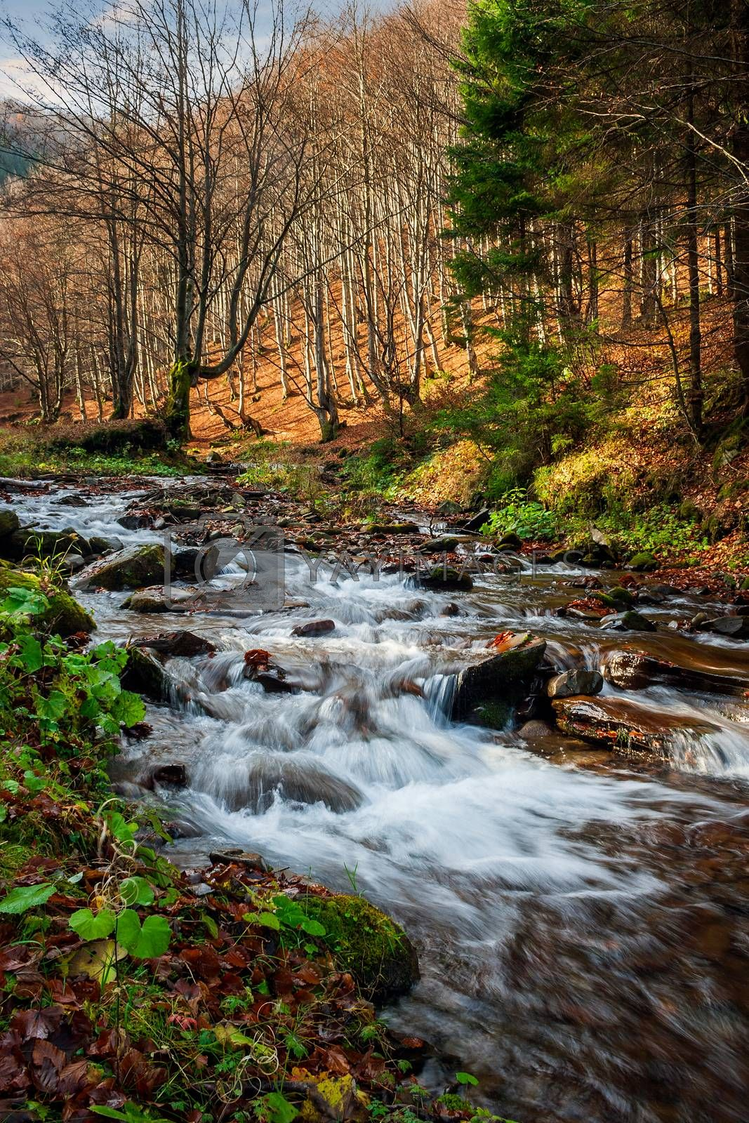 forest river with stones and moss by Pellinni
