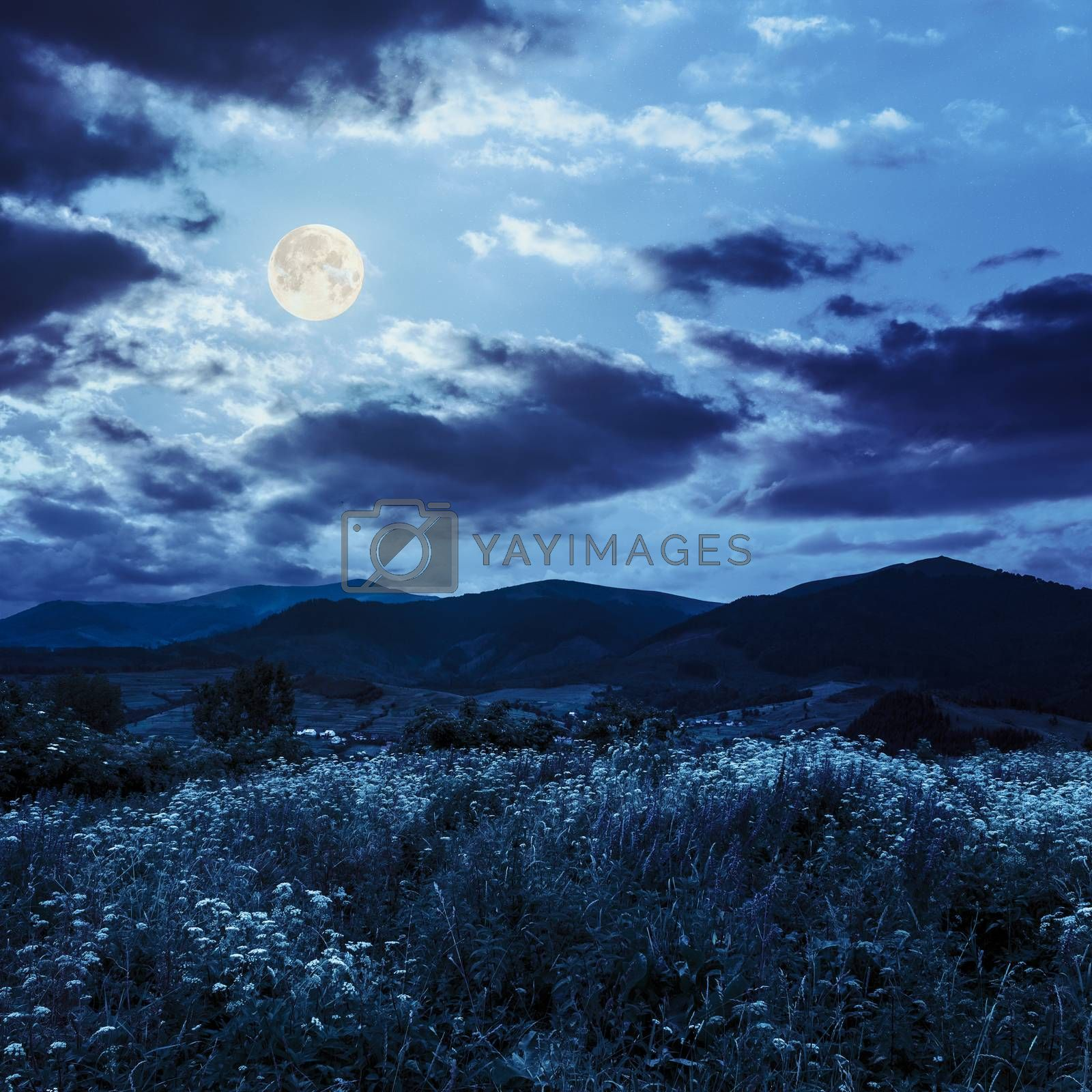 high wild plants in  mountains in moon light by Pellinni