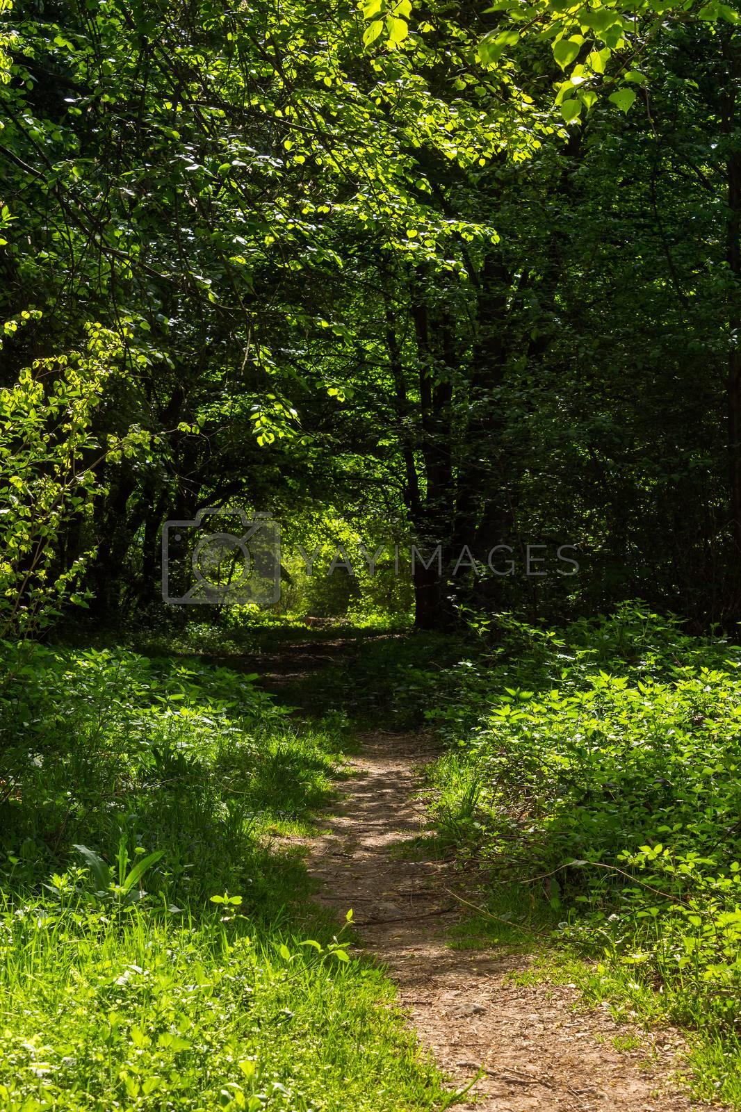 morning walks by Pellinni