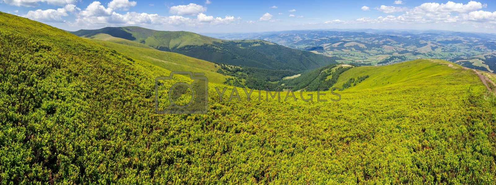 high wild plants at the mountain top by Pellinni