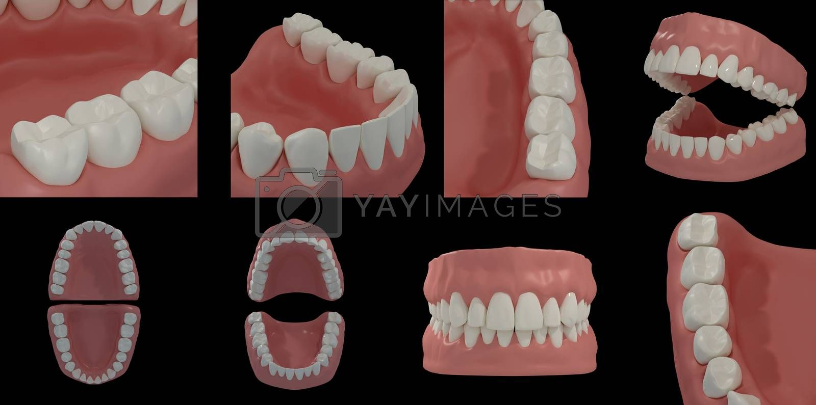 3D render teeth on black background
