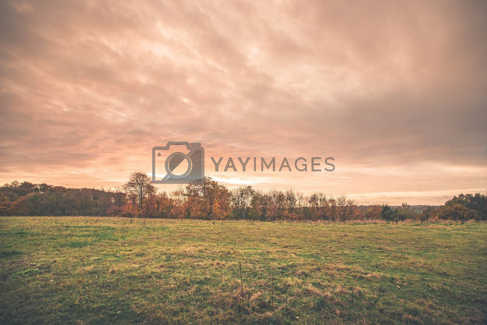 Sunset scenery in a countryside landscape with trees on a field and colorful clouds in the sky