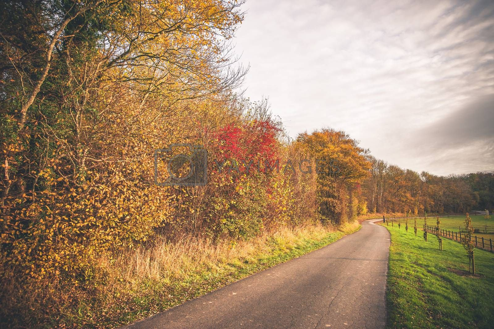 Countryside landscape in the fall by Sportactive