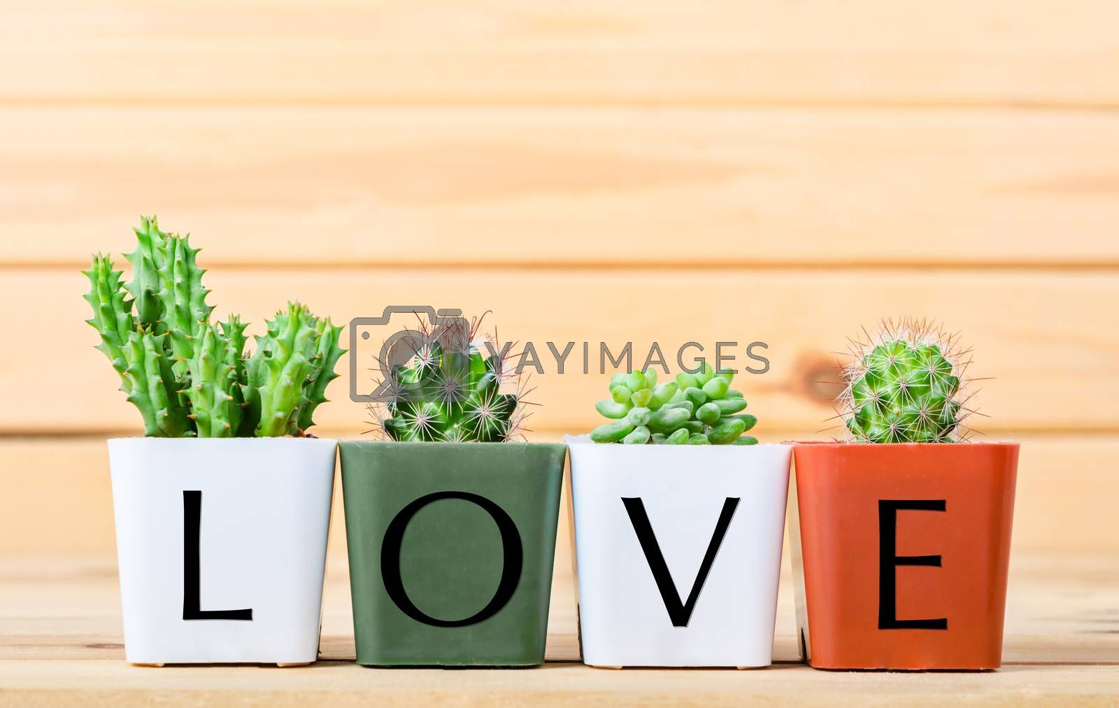 Natural Cactus Plants with love wording on light wooden background