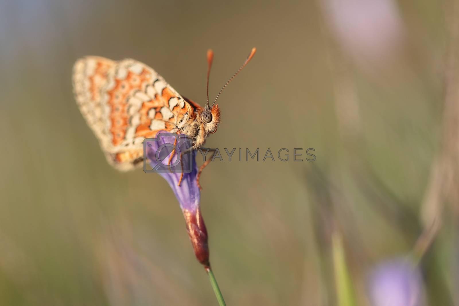 Sleeping butterfly standing in a flower