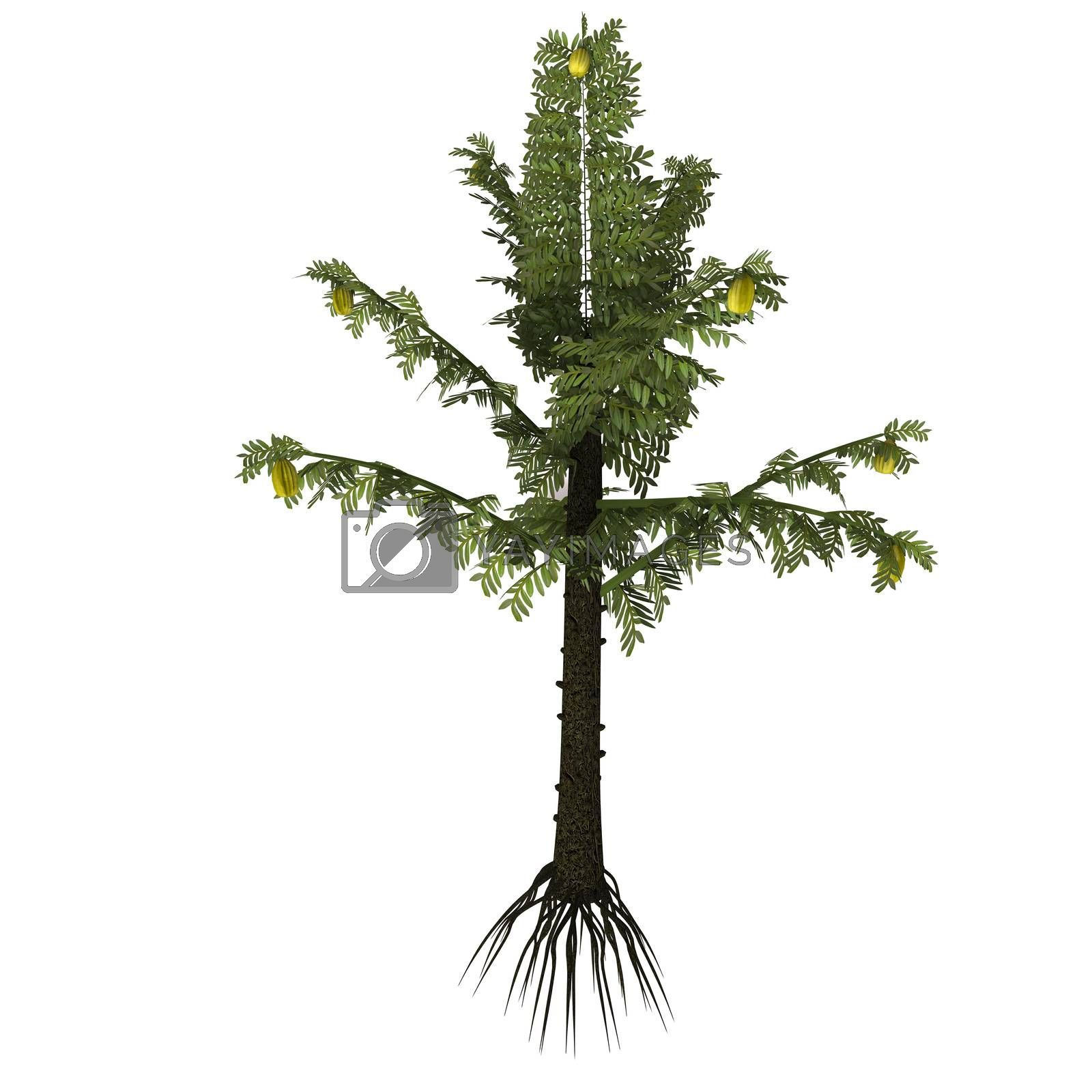Alethopteris is a prehistoric plant genus of seed fern that existed in the Carboniferous Period.
