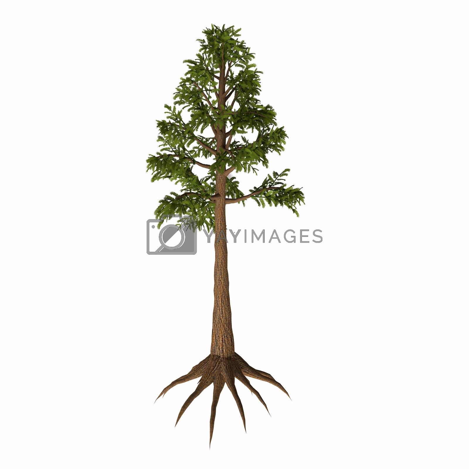 Archaeopteris is an extinct genus of tree-like plants with fern-like leaves that lived in the Devonian to Carboniferous Periods.