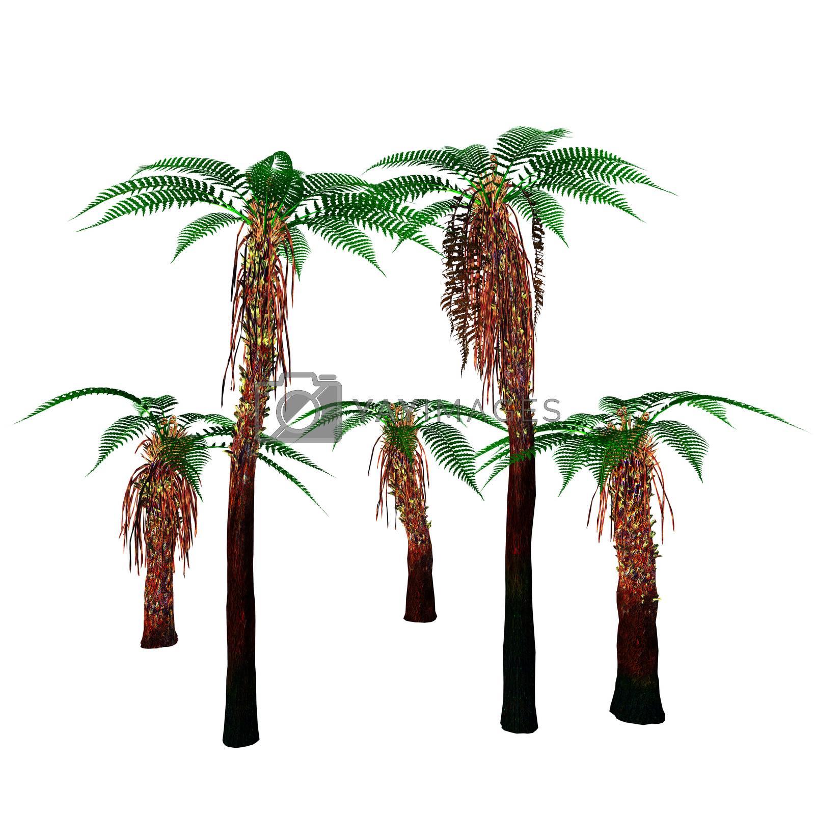 Dicksonia antarctica is an evergreen tree native to Australia and Tasmania.
