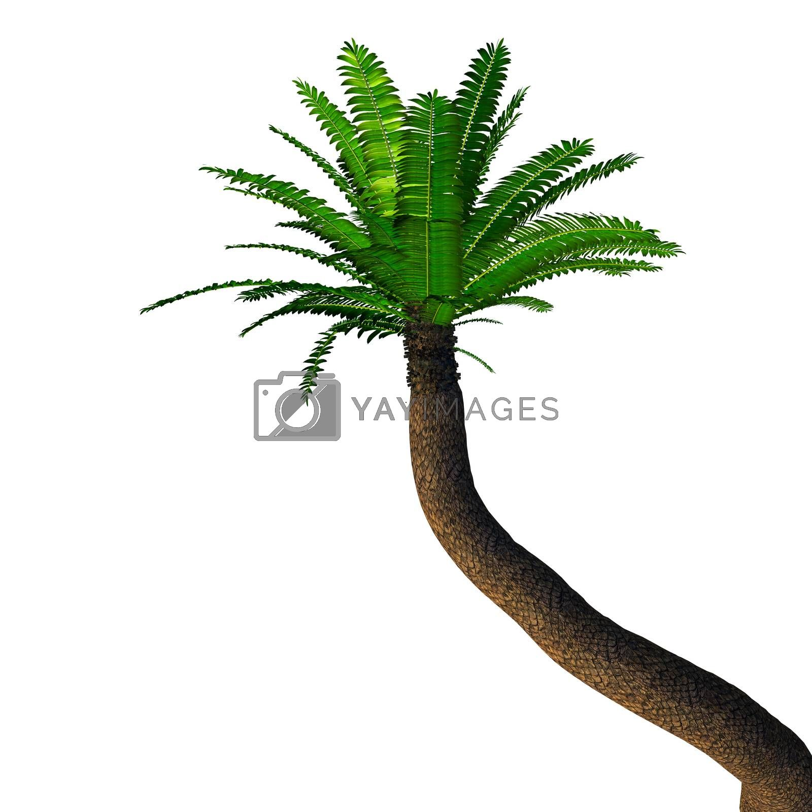 Cycads have a stout woody trunk with a crown of evergreen leaves and were more numerous in prehistoric times.