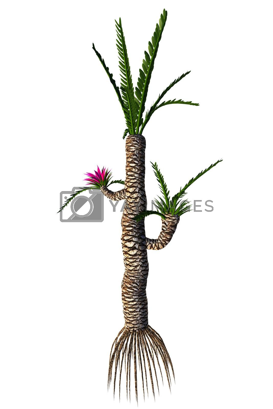 Williamsonia resembled a shrub or tree that lived in the Jurassic to the Cretaceous Periods.