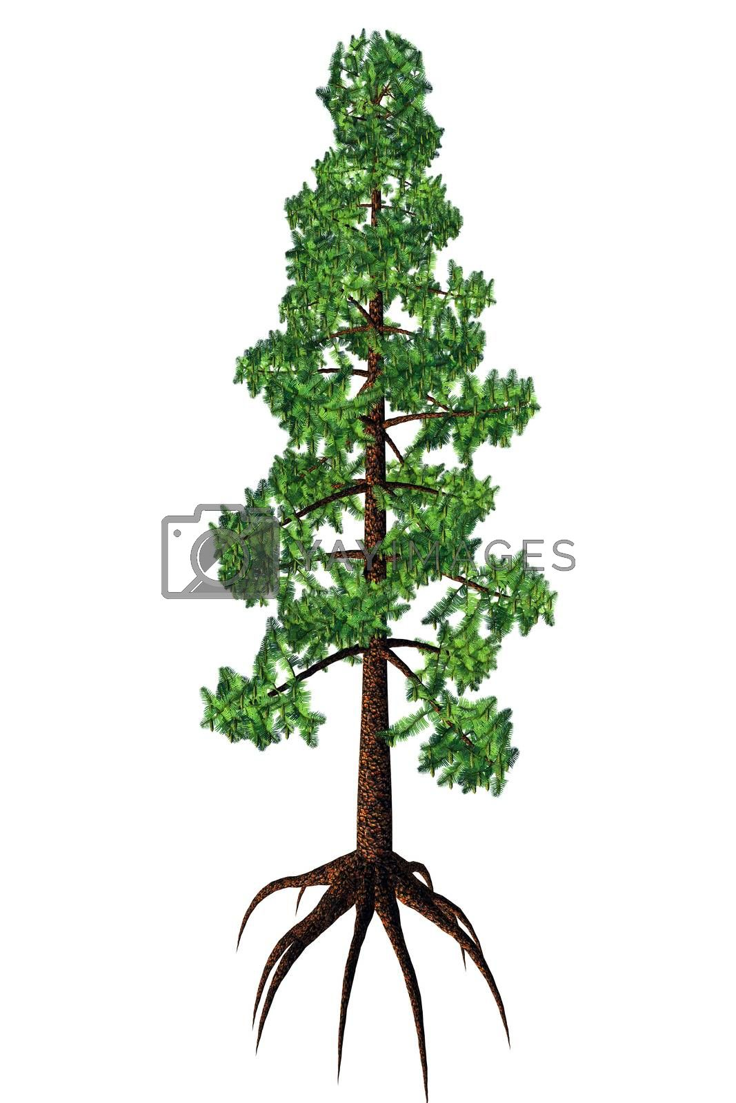 Wollemia was thought to be an extinct coniferous tree but was found to be living in Australia in 1994.