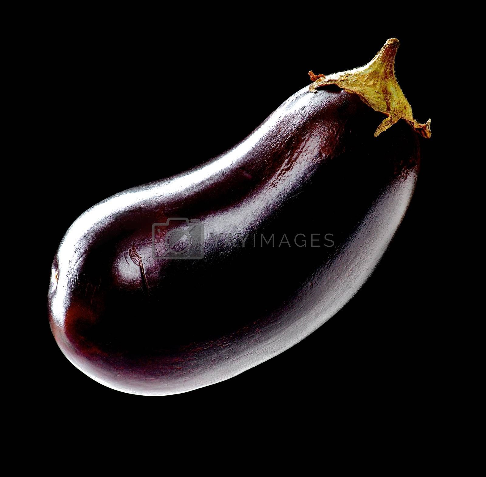 Perfect Raw Eggplant in Shadow Hanging isolated on Black background