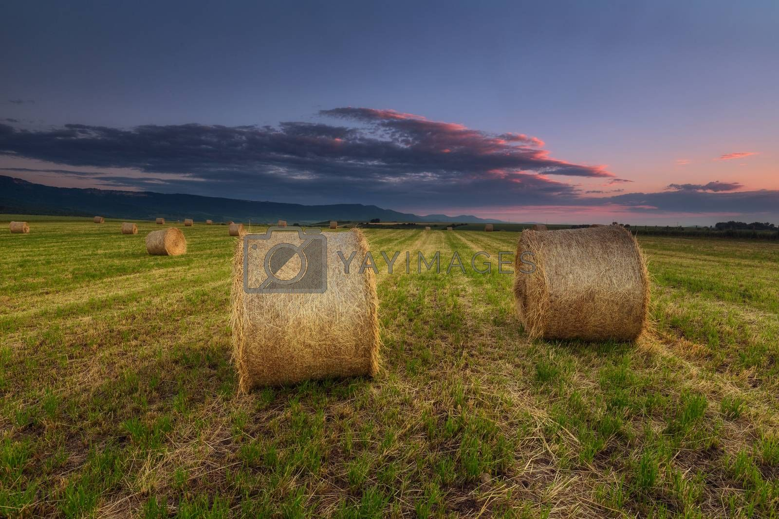 Harvest time, bundles in the field