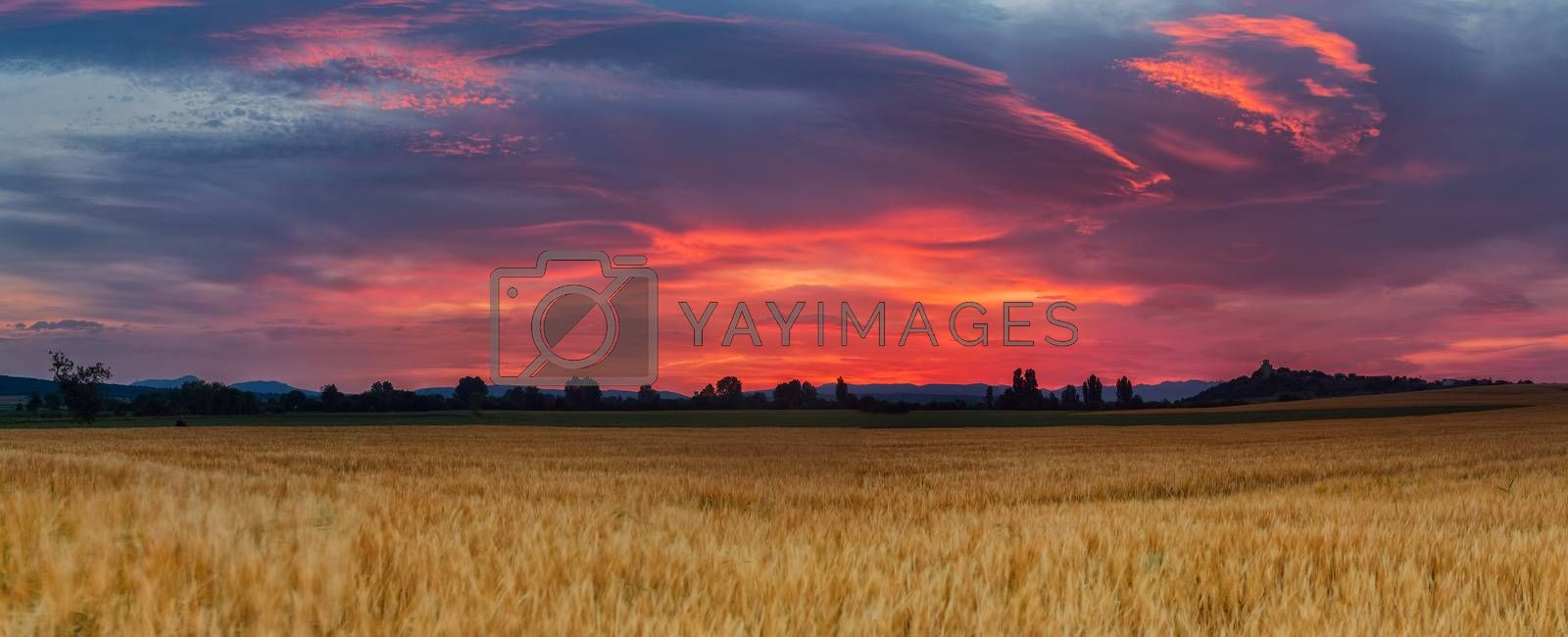 Amazing sunrise over a cereal field
