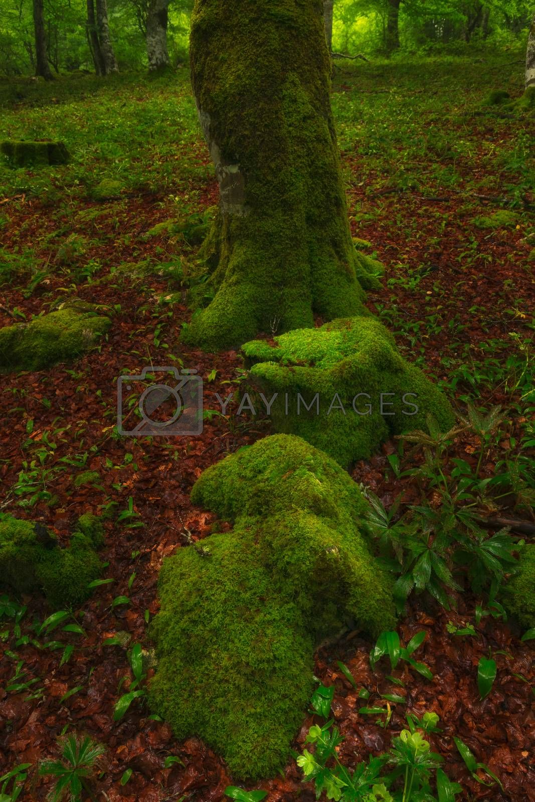 Green moss in the forest