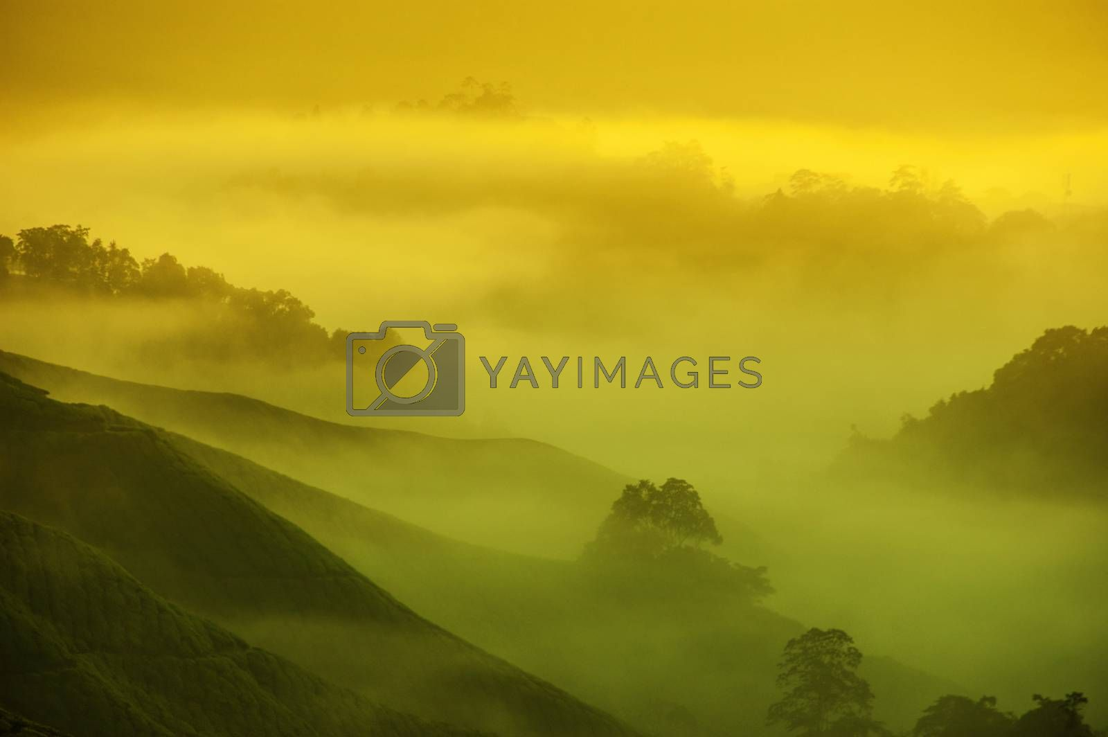 Tea farm in sunrise with misty golden sunlight at Cameron Highlands, Malaysia