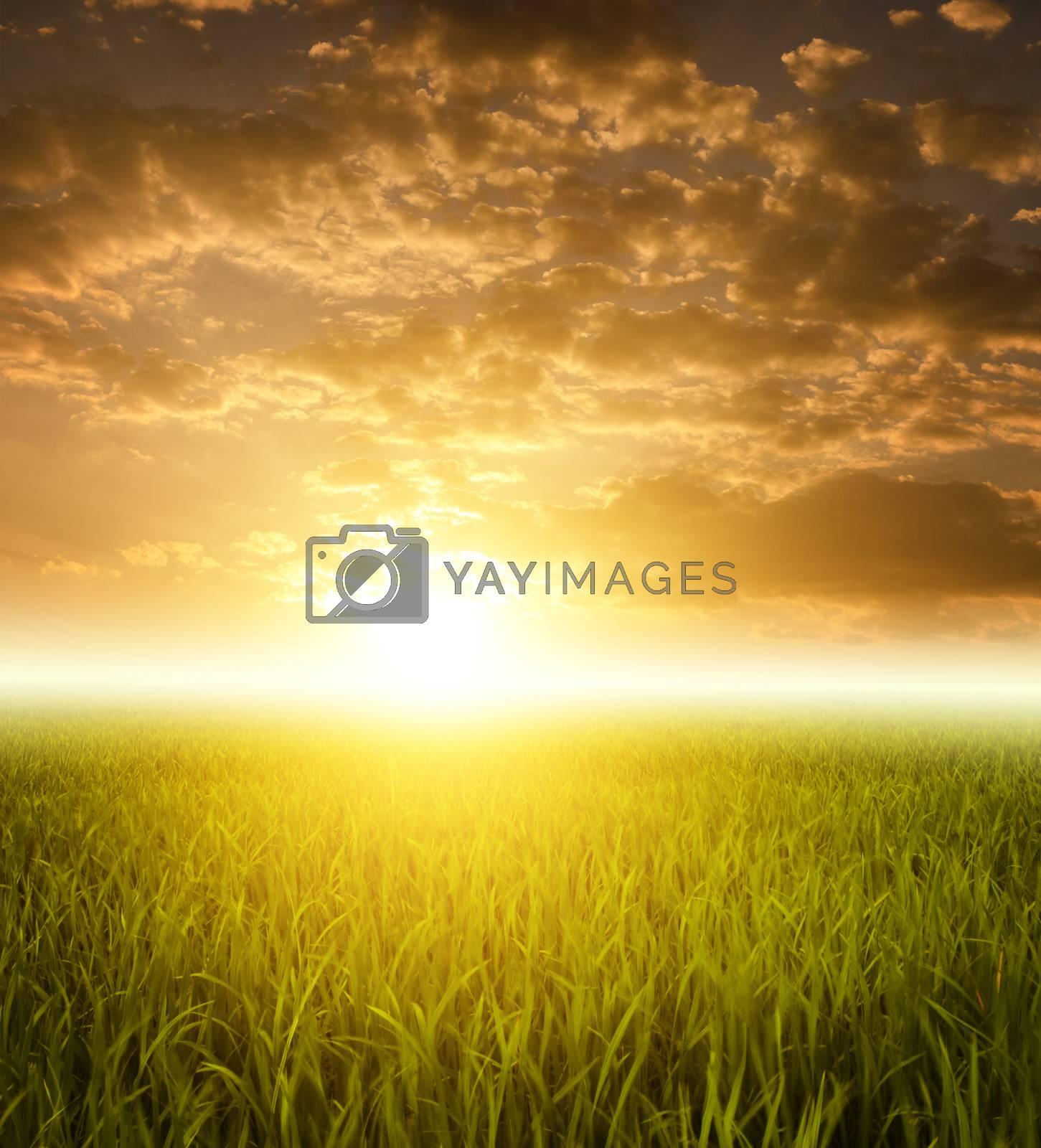 Paddy fields landscape view in morning sunrise.