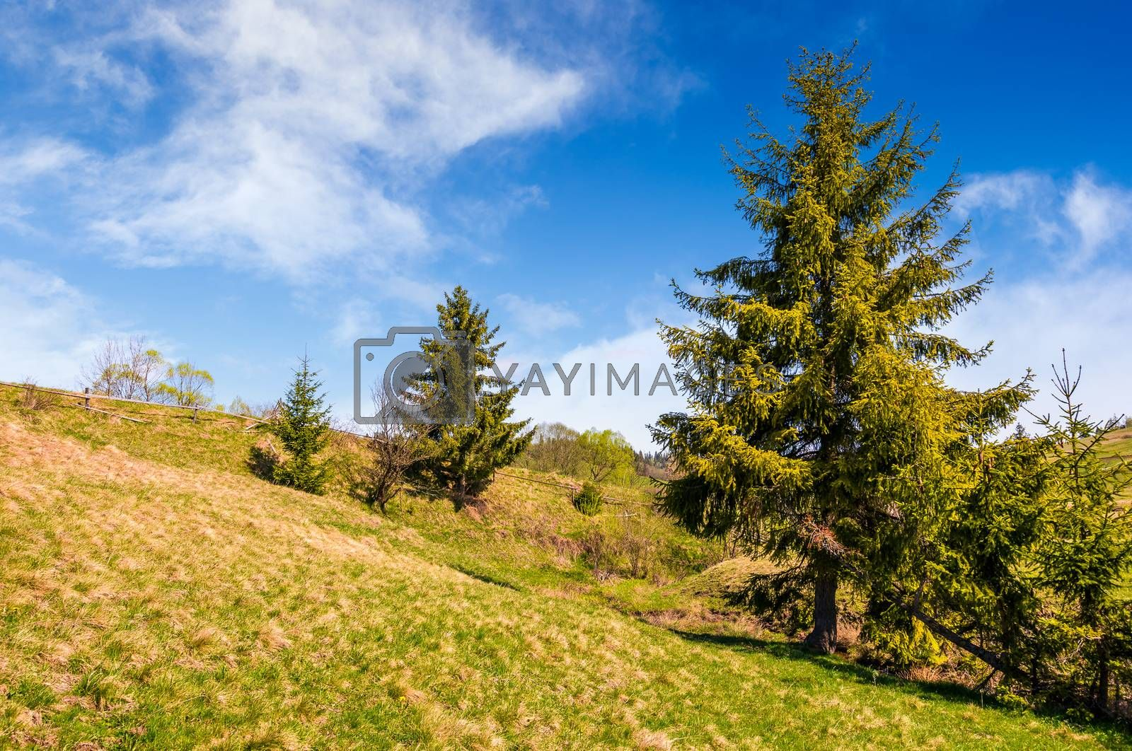 forest on a hill side meadow with fence. beautiful summer day in fine weather. countryside landscape