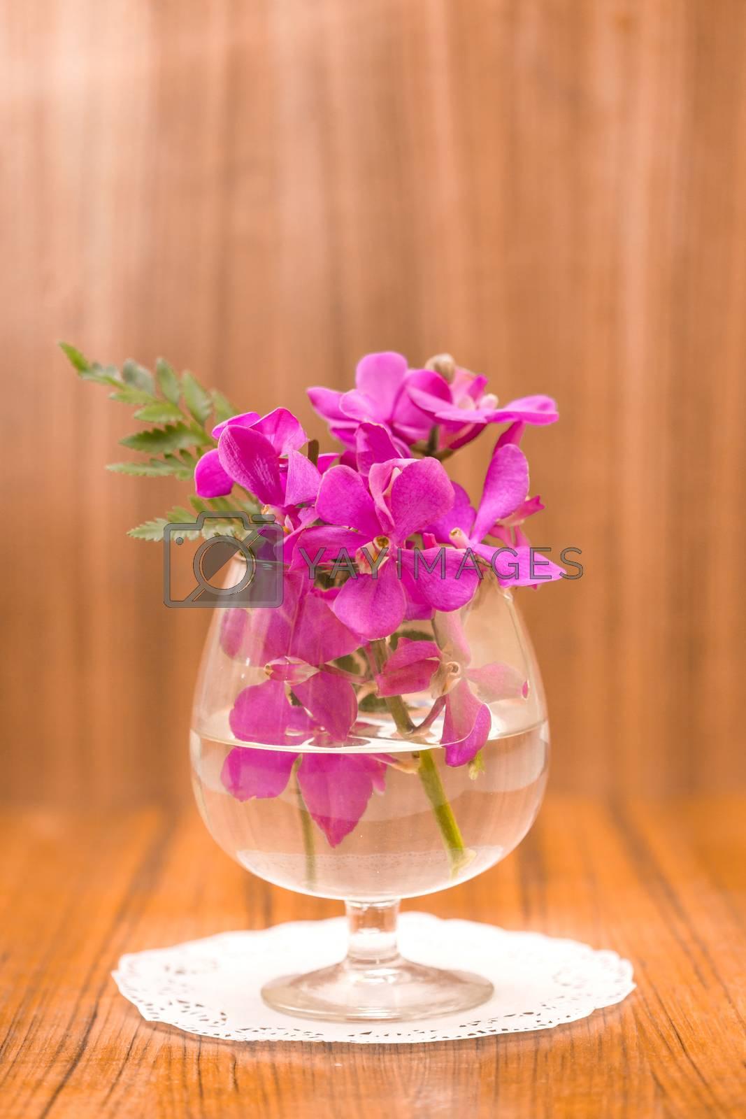 Still life Beautiful Purple orchid flower .