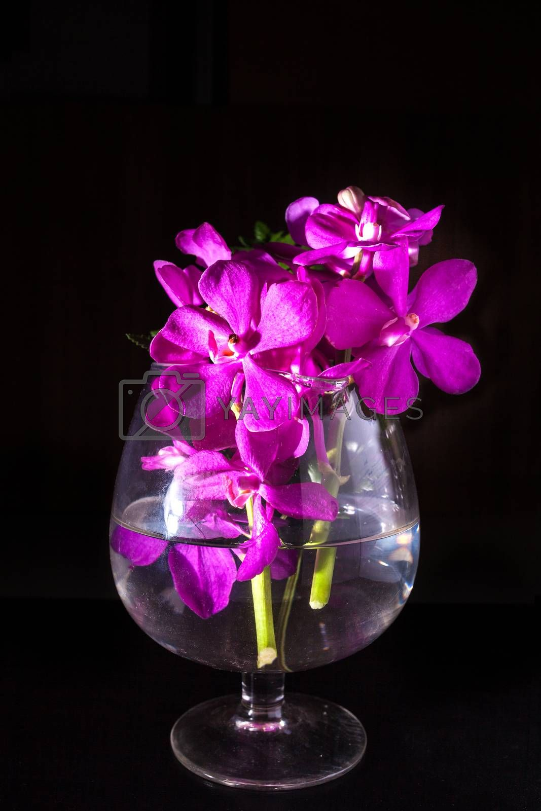 Beautiful Purple orchid flower on black.