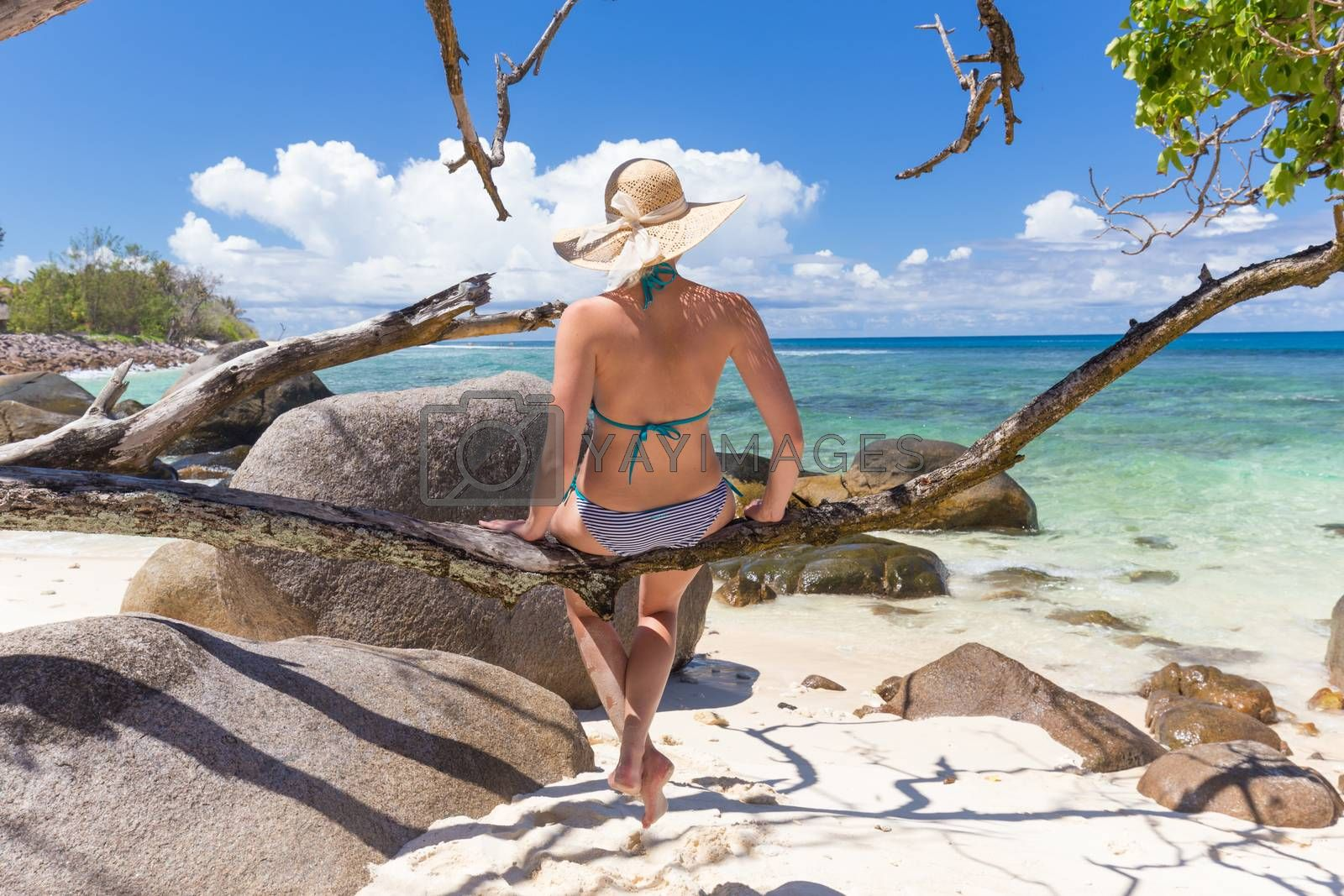 Beautiful women wearing bikini and sun hat sitting on tree branch at picture perfect tropical beach on Mahe island, Seychelles, looking at emerald sea and white clouds on horizon.