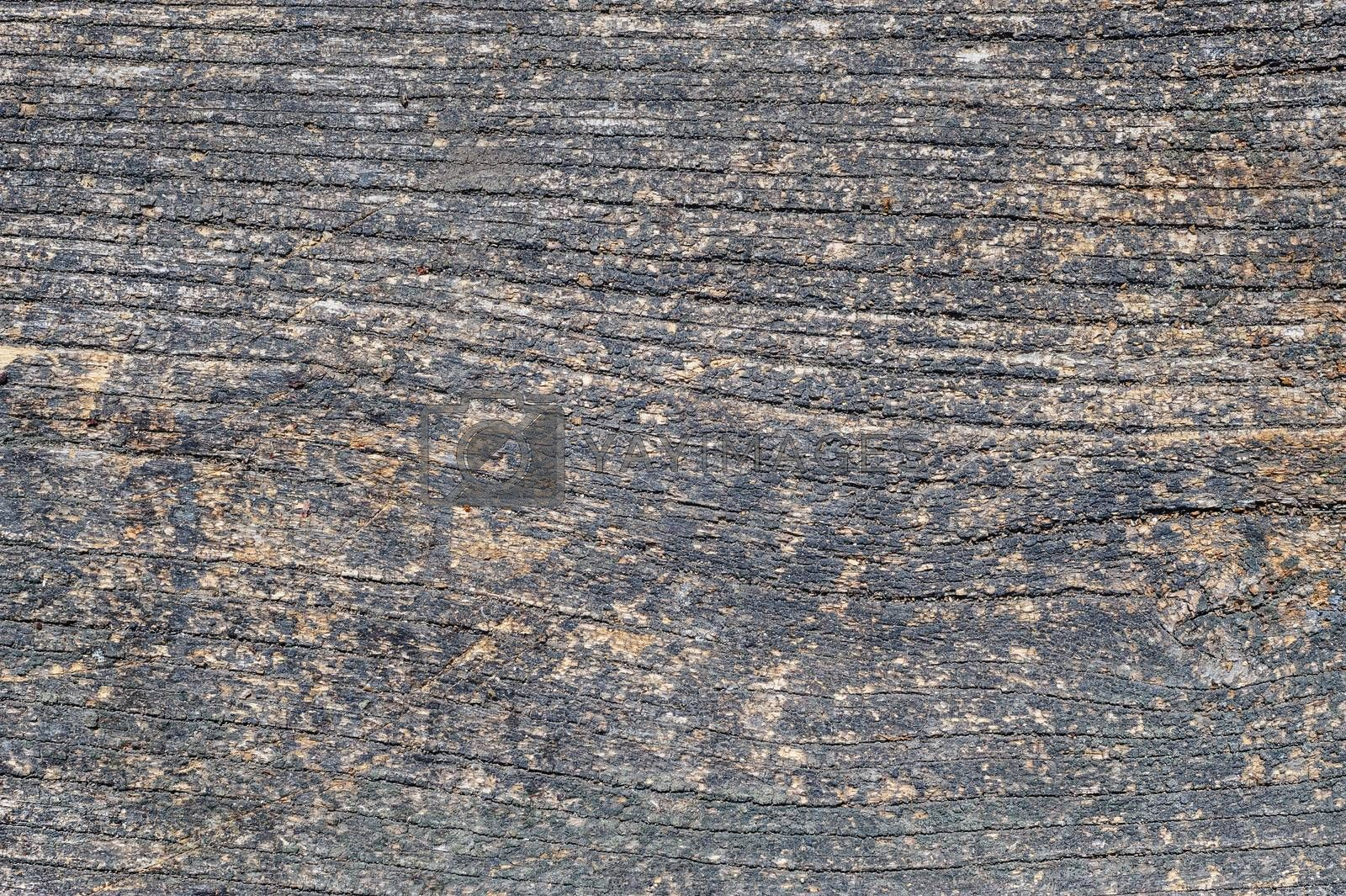 Old aged cracked wood planks, texture with natural organic pattern