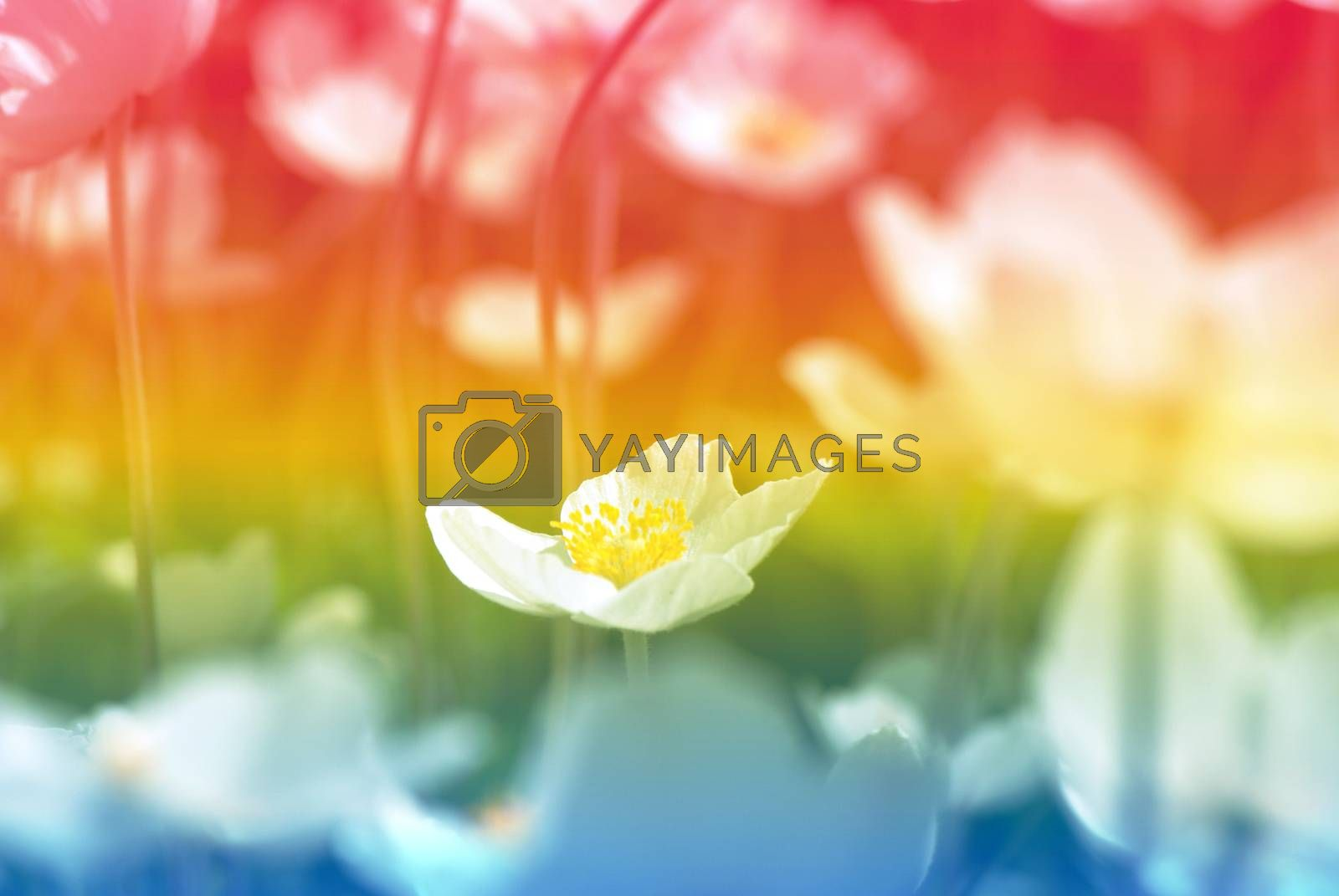 Wildflowers in rainbow colors of the morning garden