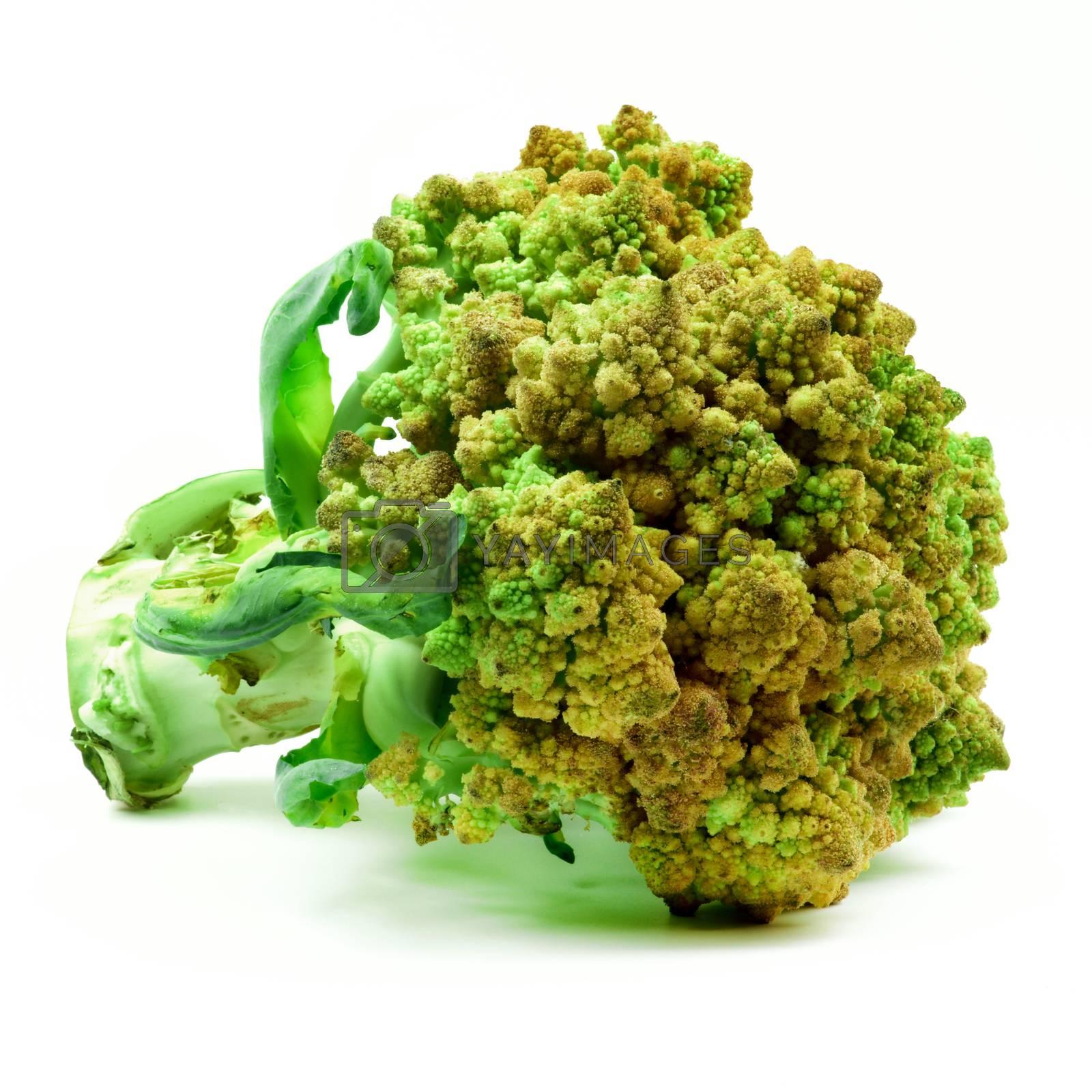 Perfect Raw Fresh Romanesco Broccoli with Leafs closeup on White background