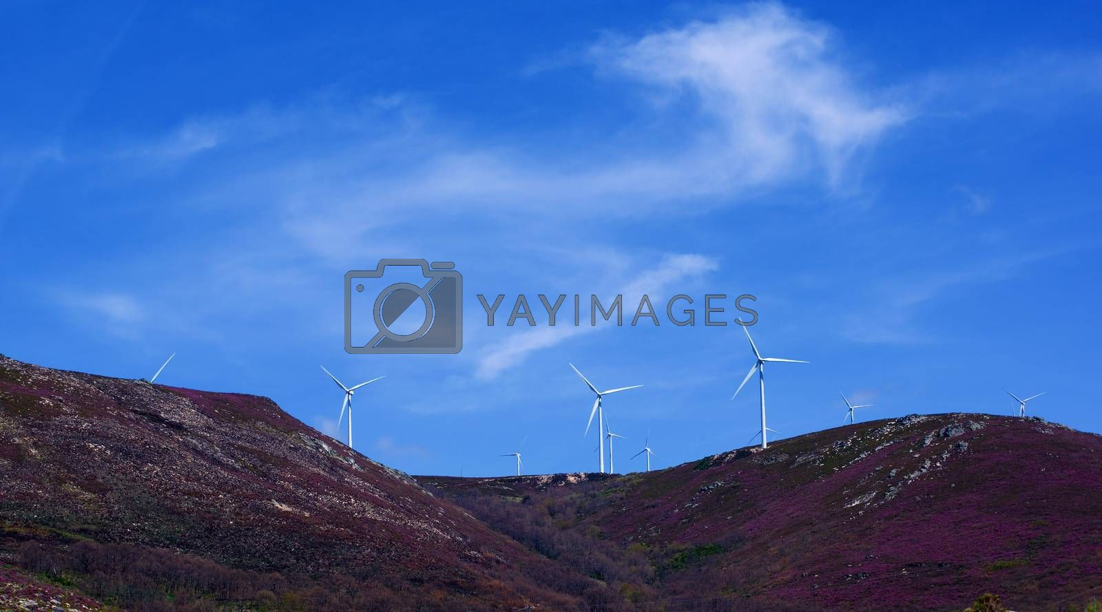 Royalty free image of Wind Turbines on Lavender Hills by zhekos