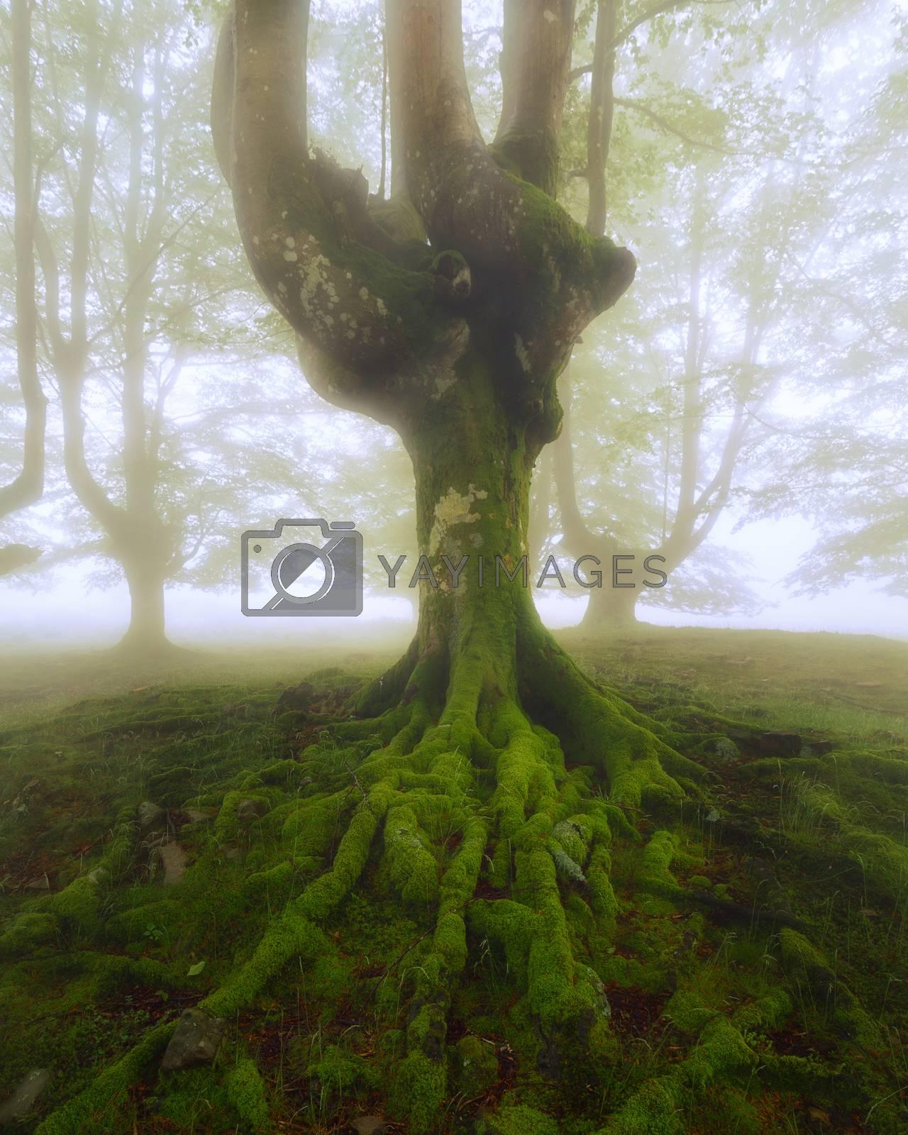 Tree roots at Gorbea Natural Park