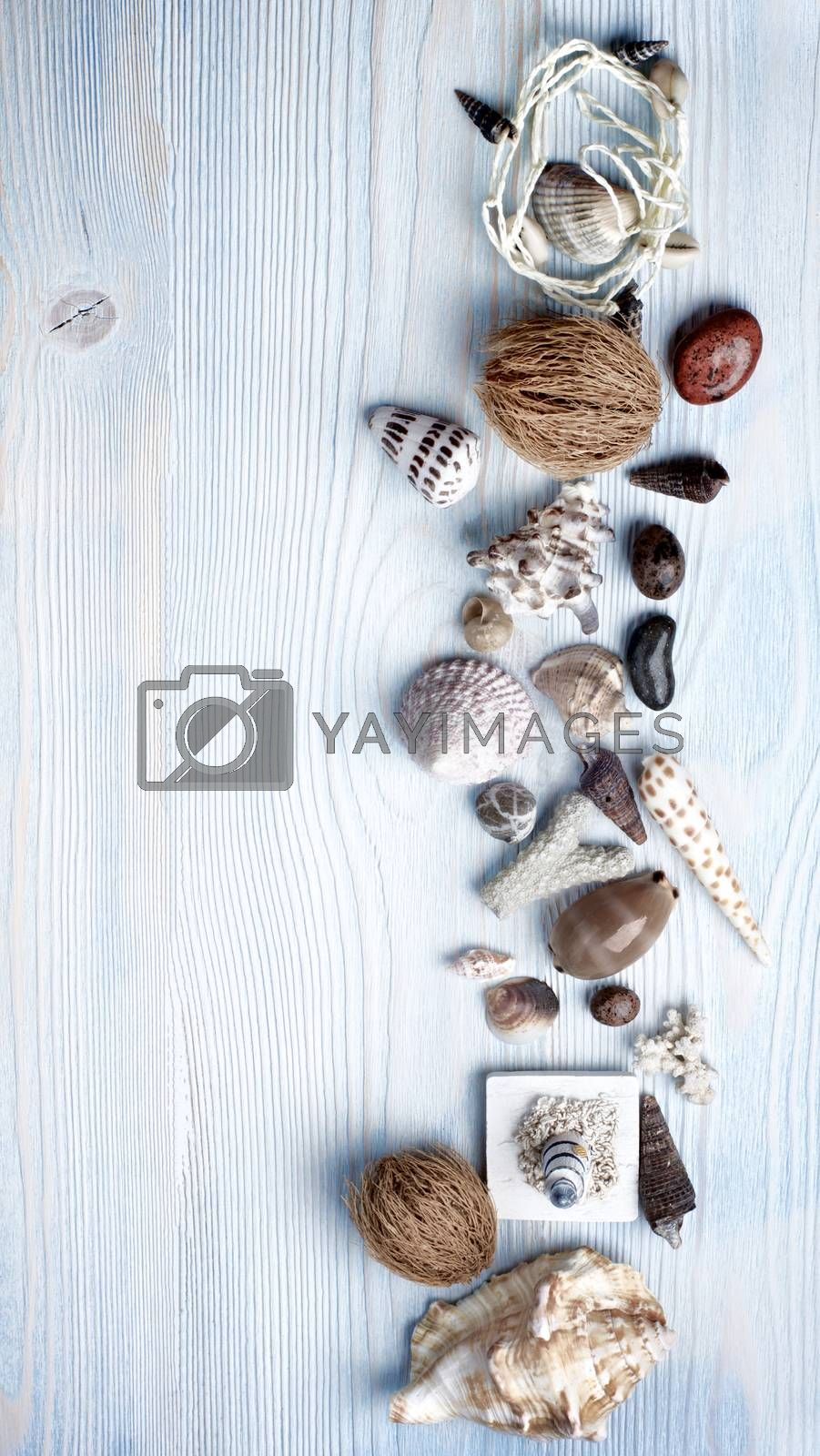Frame of Various Shells, Dry Plants, Stones and Chalk closeup on Light Blue Wooden background. Top View