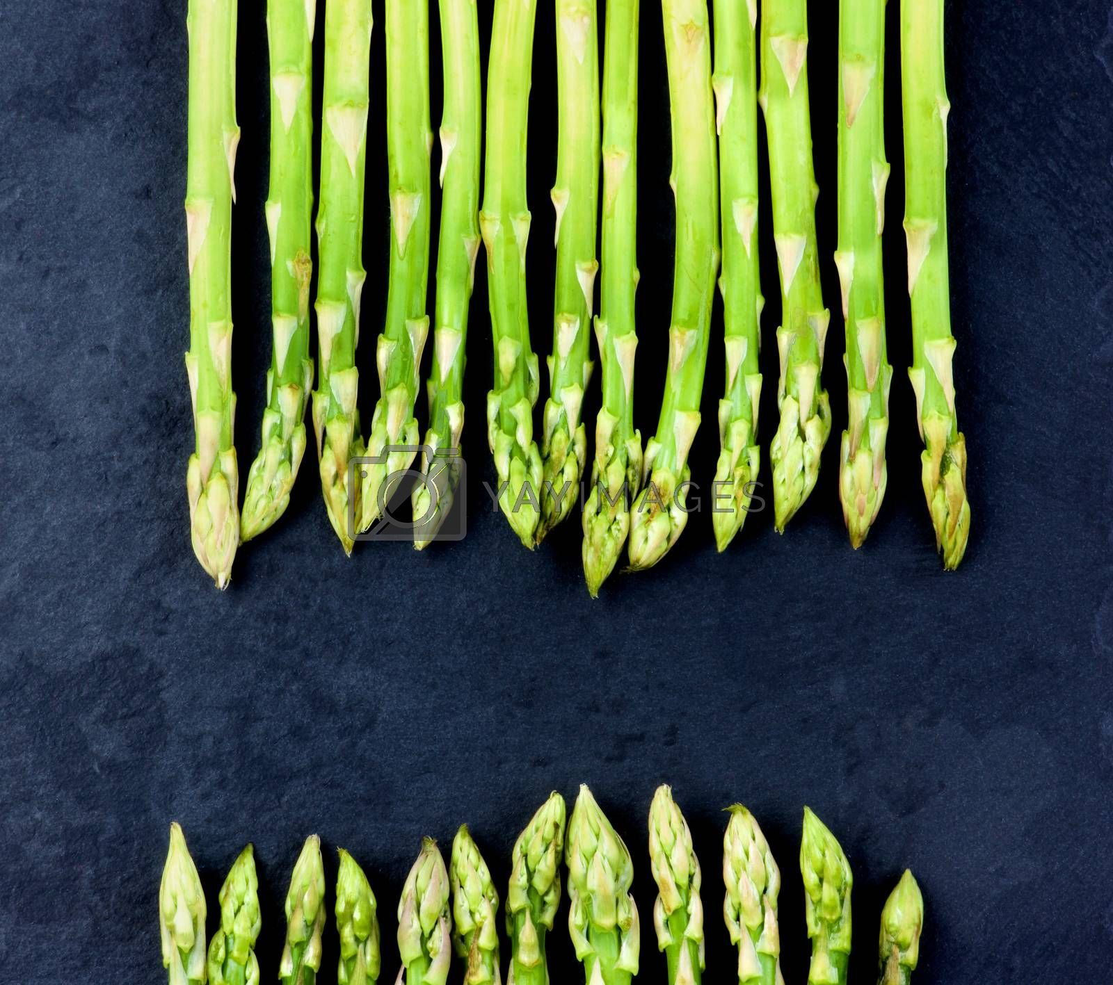 Royalty free image of Fresh Asparagus Sprouts by zhekos