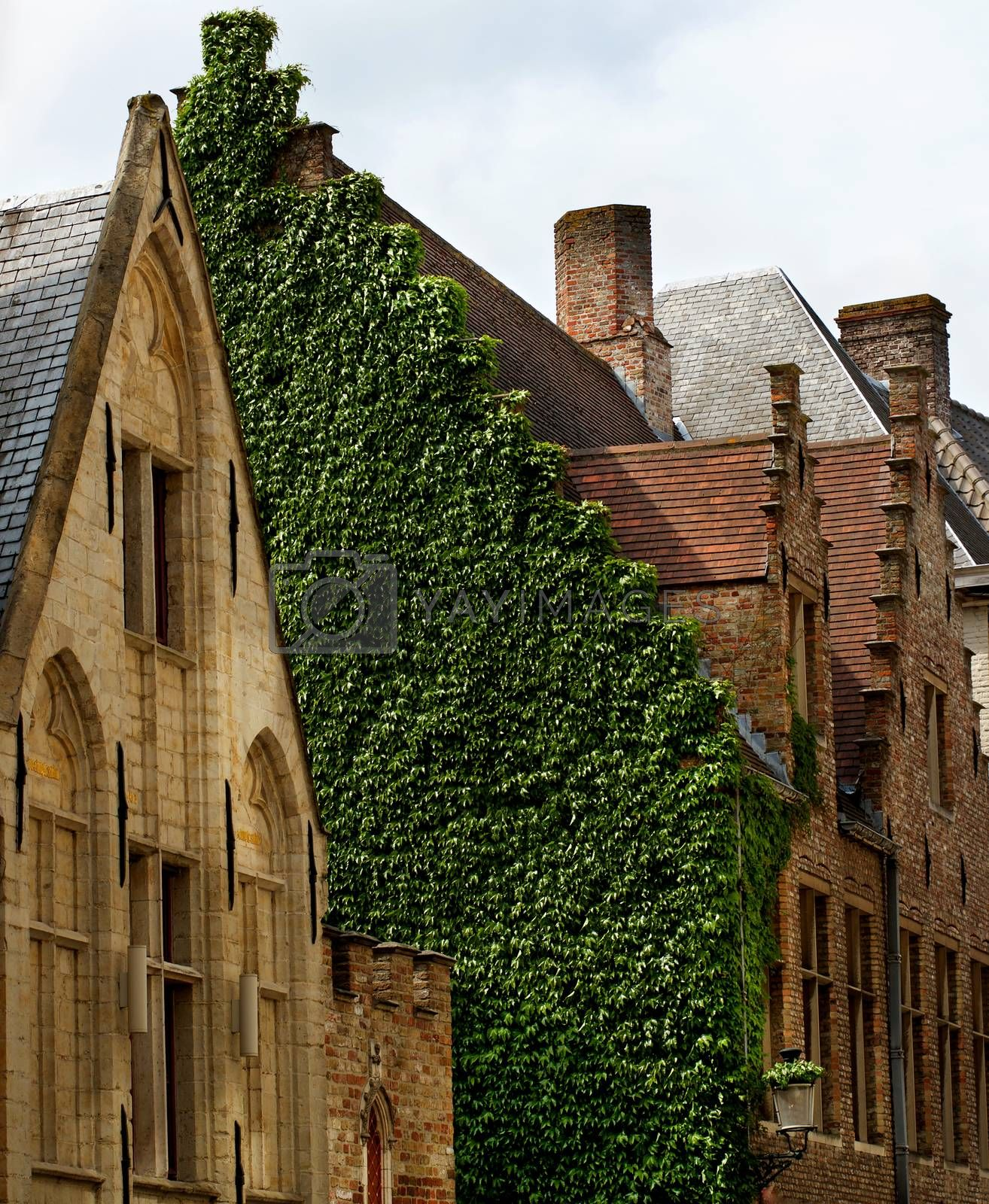 Old Medieval Houses with Wall of Ivy against Cloudy Sky Outdoors. Bruges, Belgium