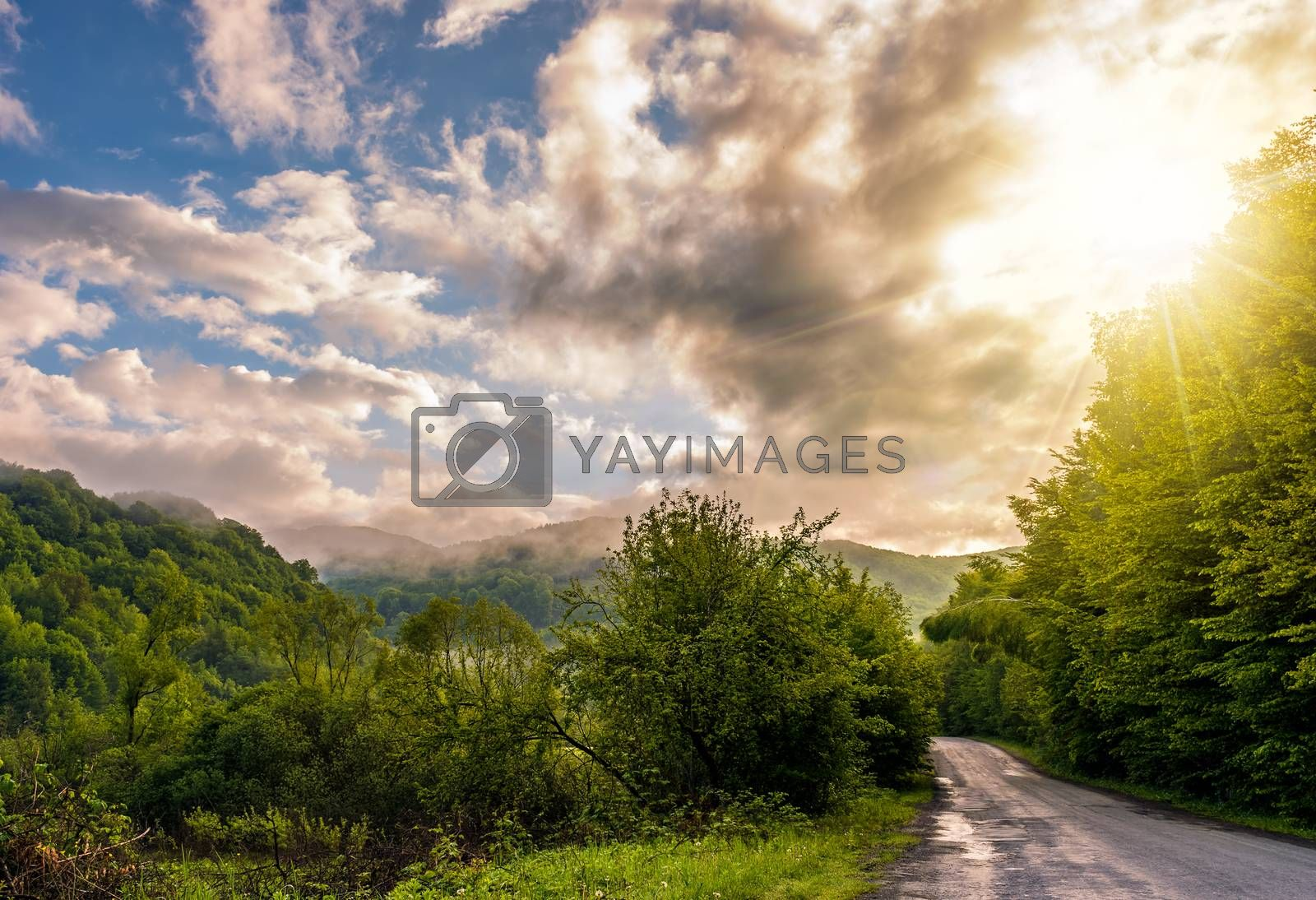 countryside road through the forest in valley by Pellinni