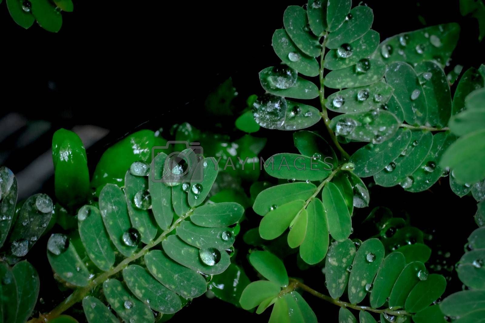 water drops on leaves by gukgui