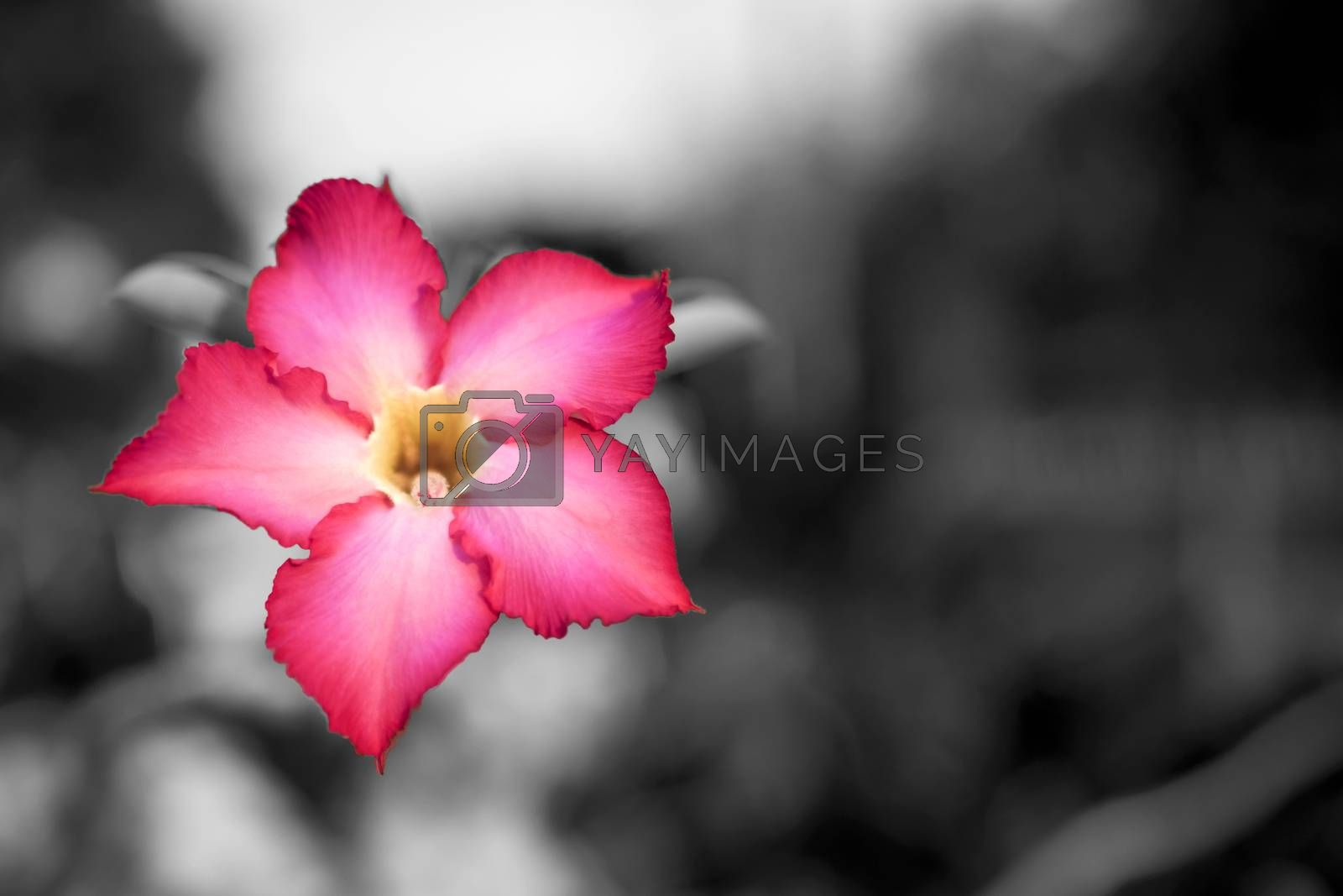 pink flower background