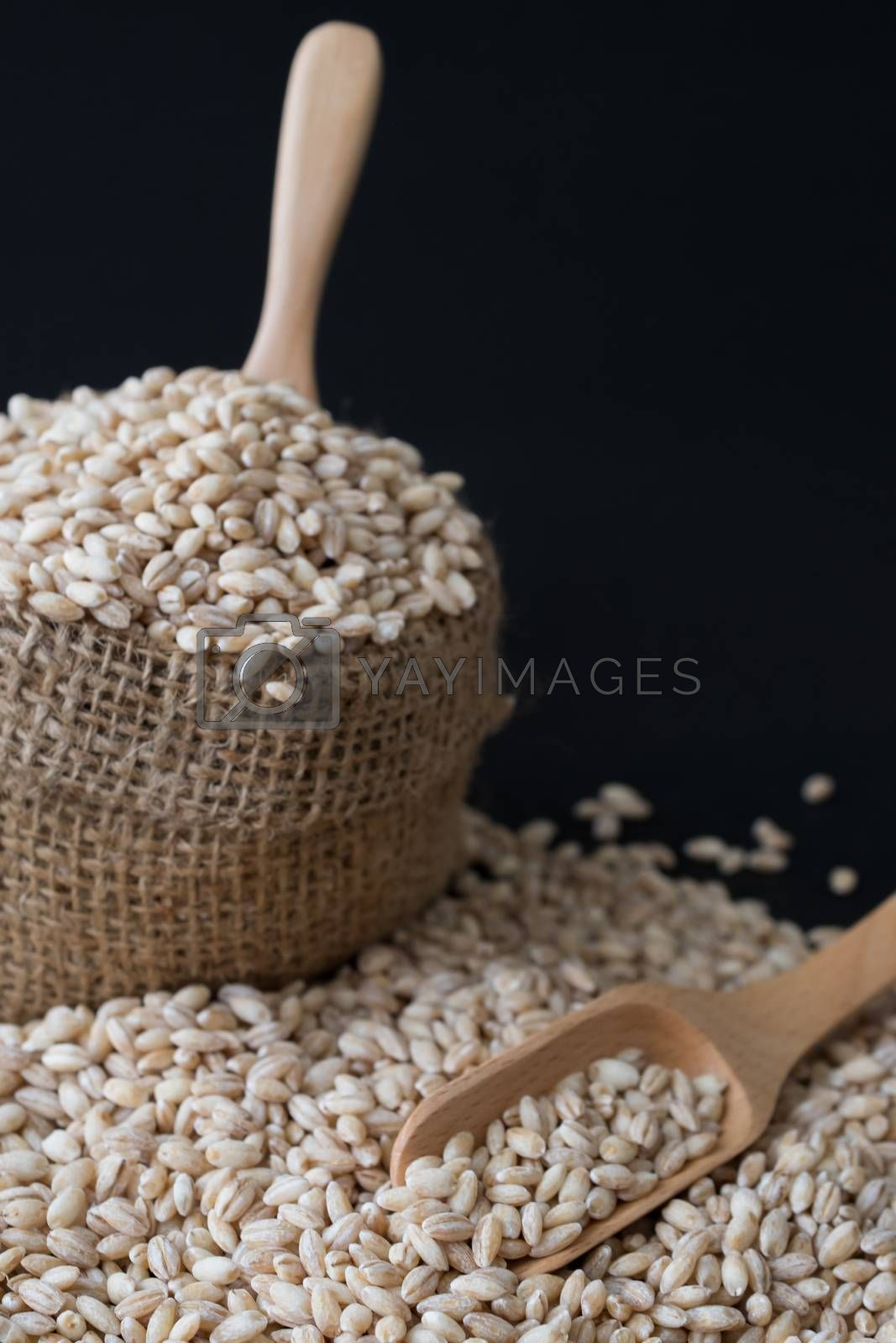 pearls barley grain seed on background