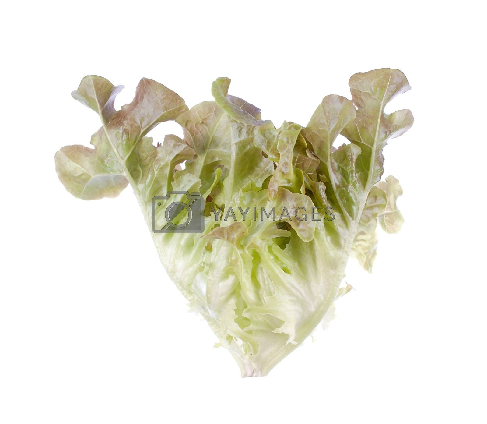 salads leaves close up isolated on white background  by gukgui