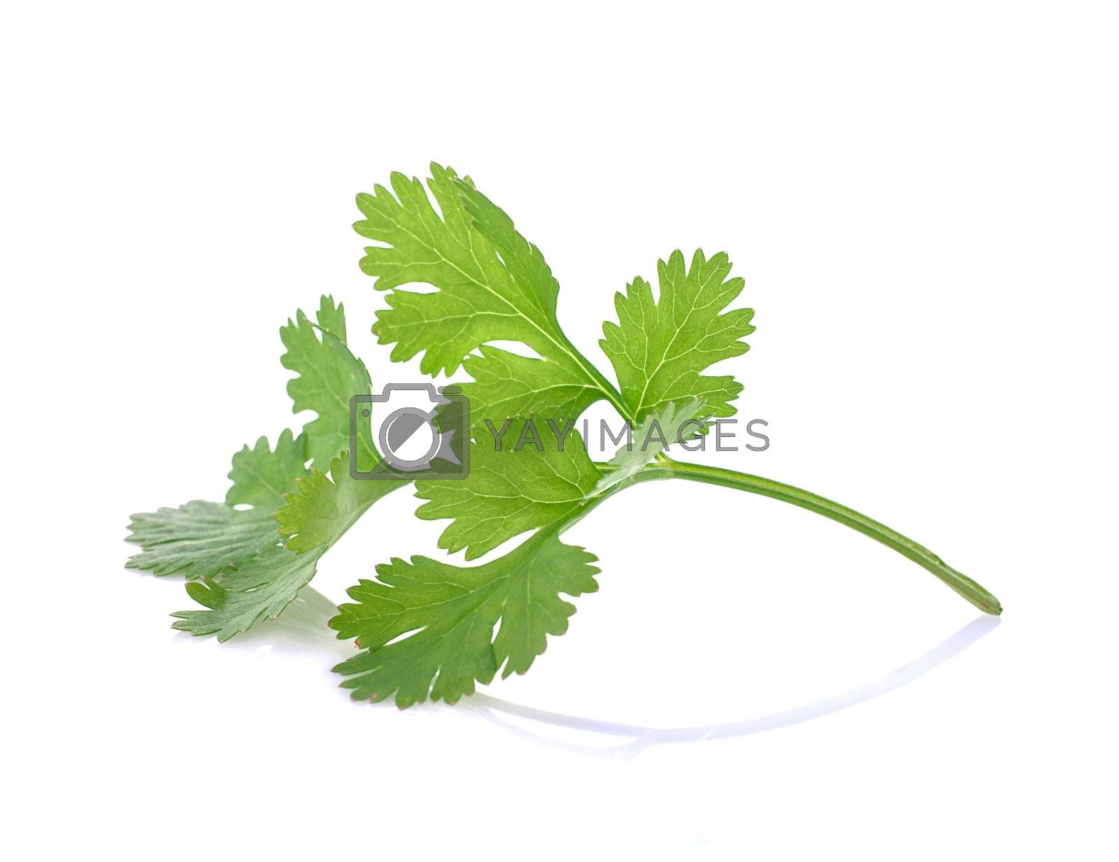 Coriander leaf isolated on white background  by gukgui