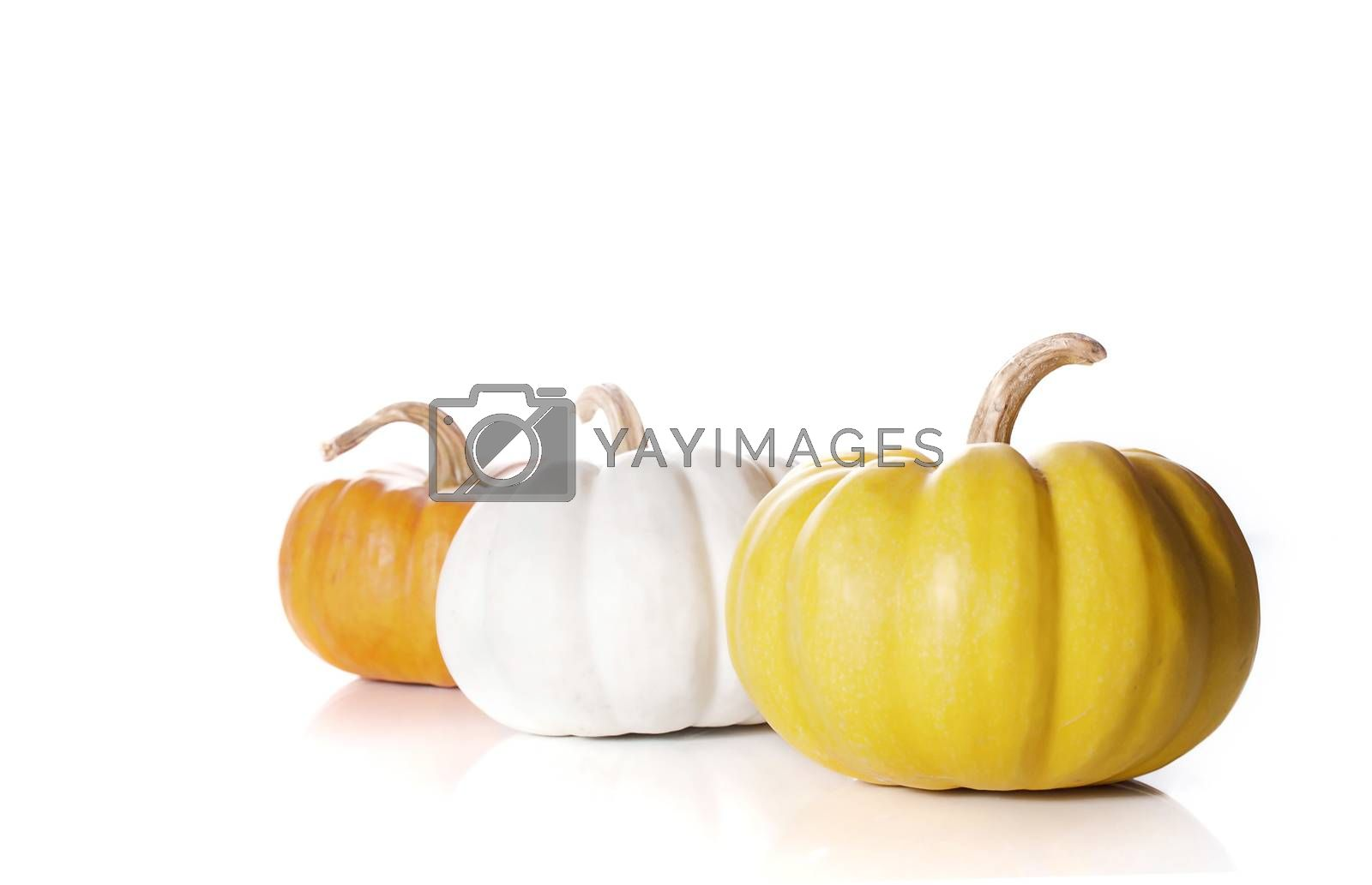 pumpkins close up isolated on white.