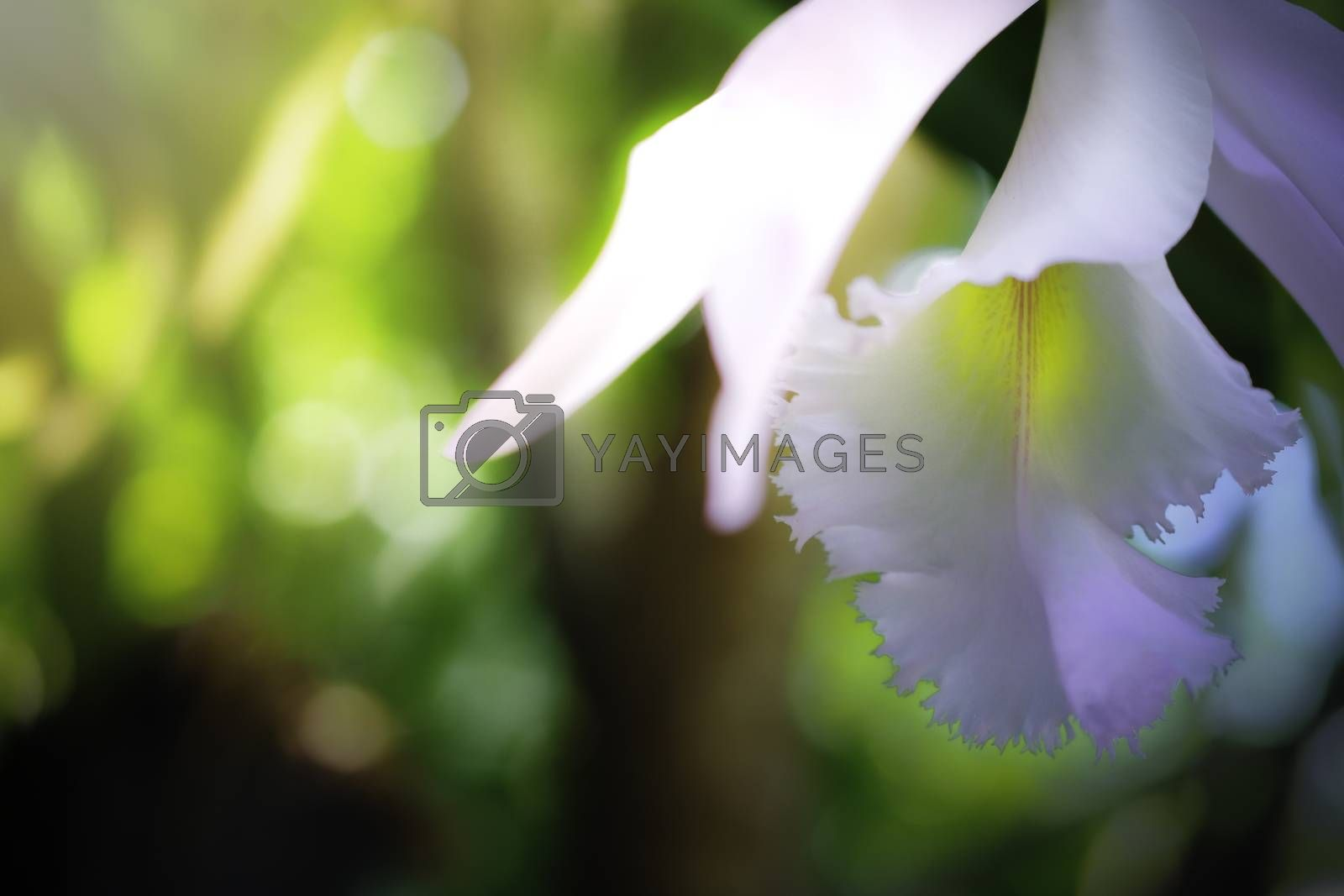 orchid close up isolated on background