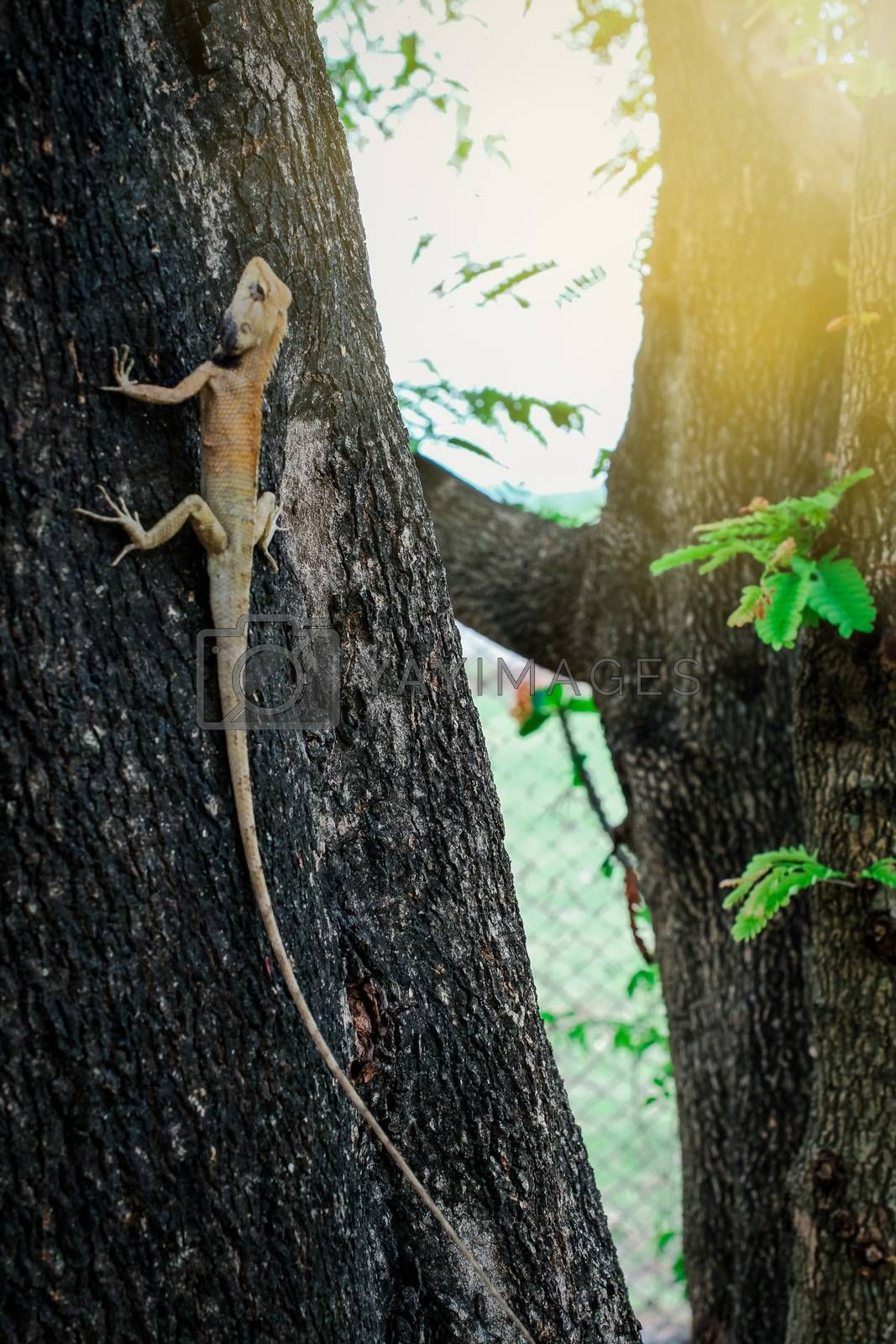 lizard with tamarind trees background.