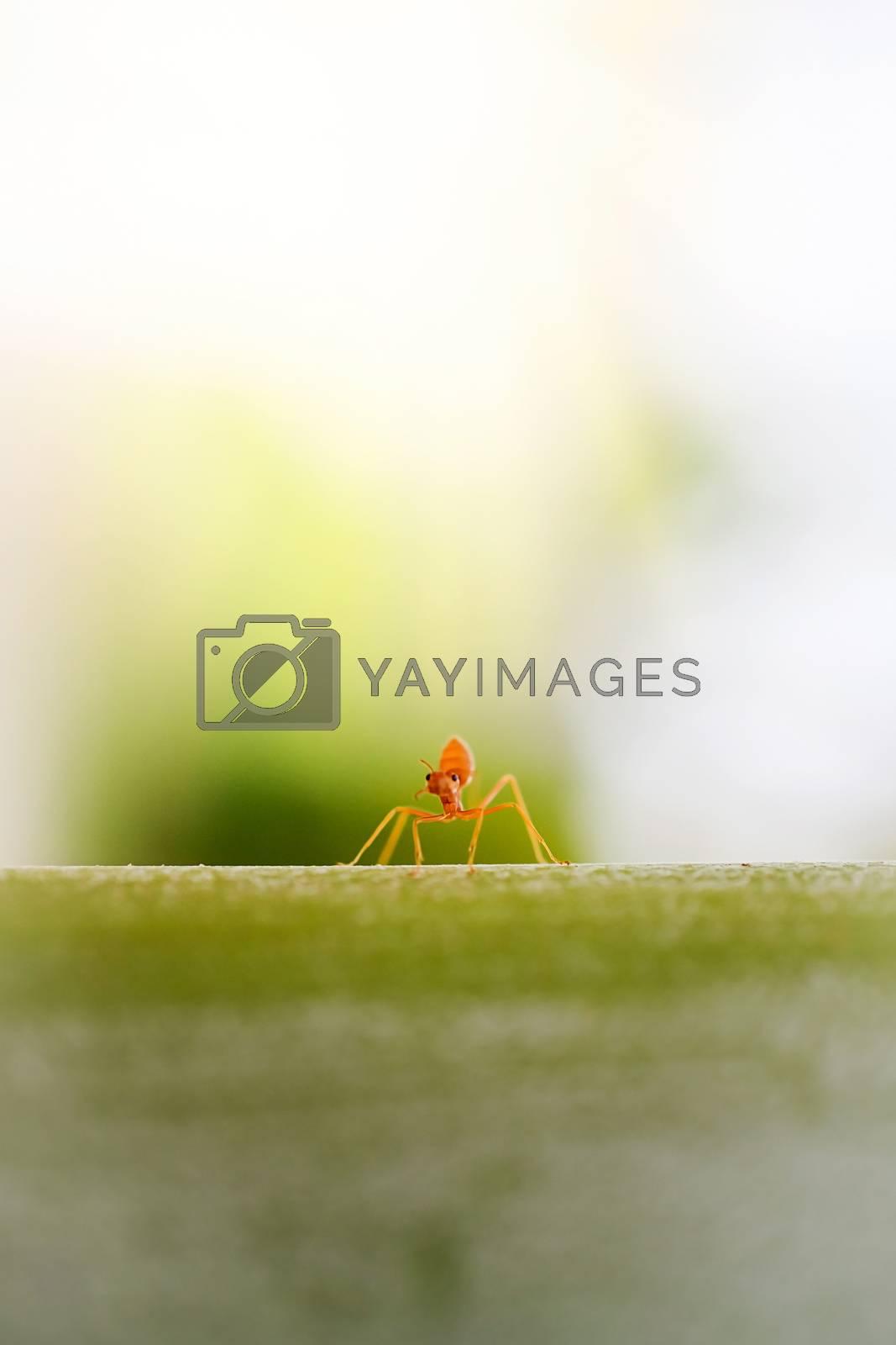 ant wildlife on plant texture .
