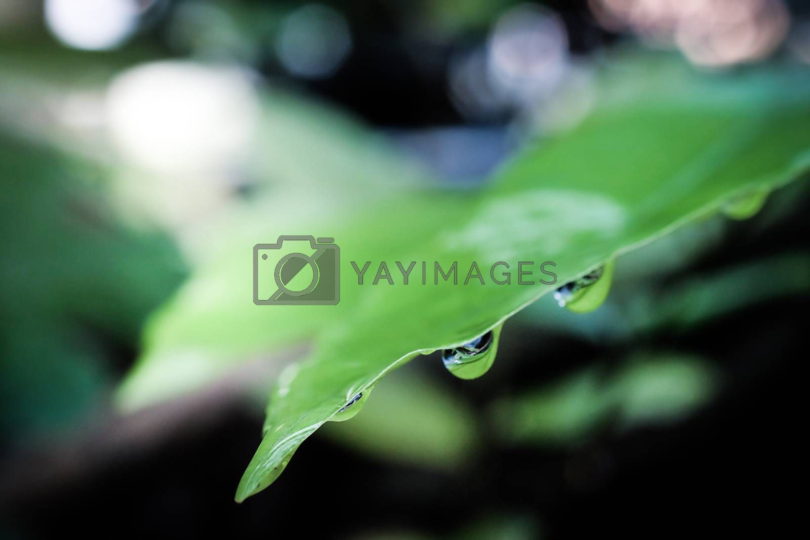 leaves close up isolated on background