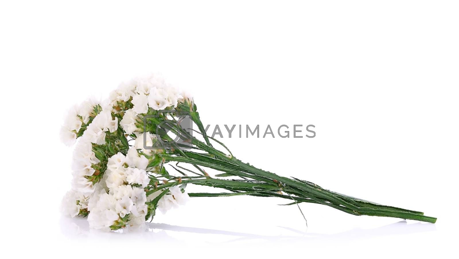 Flowers close up isolated for white background