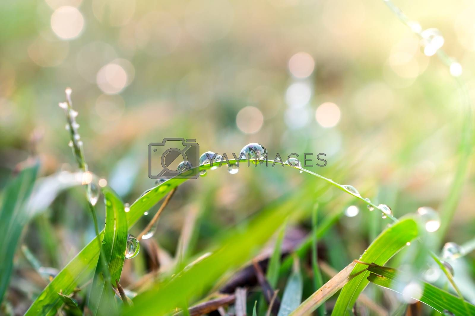 Drop on leaf with sun light