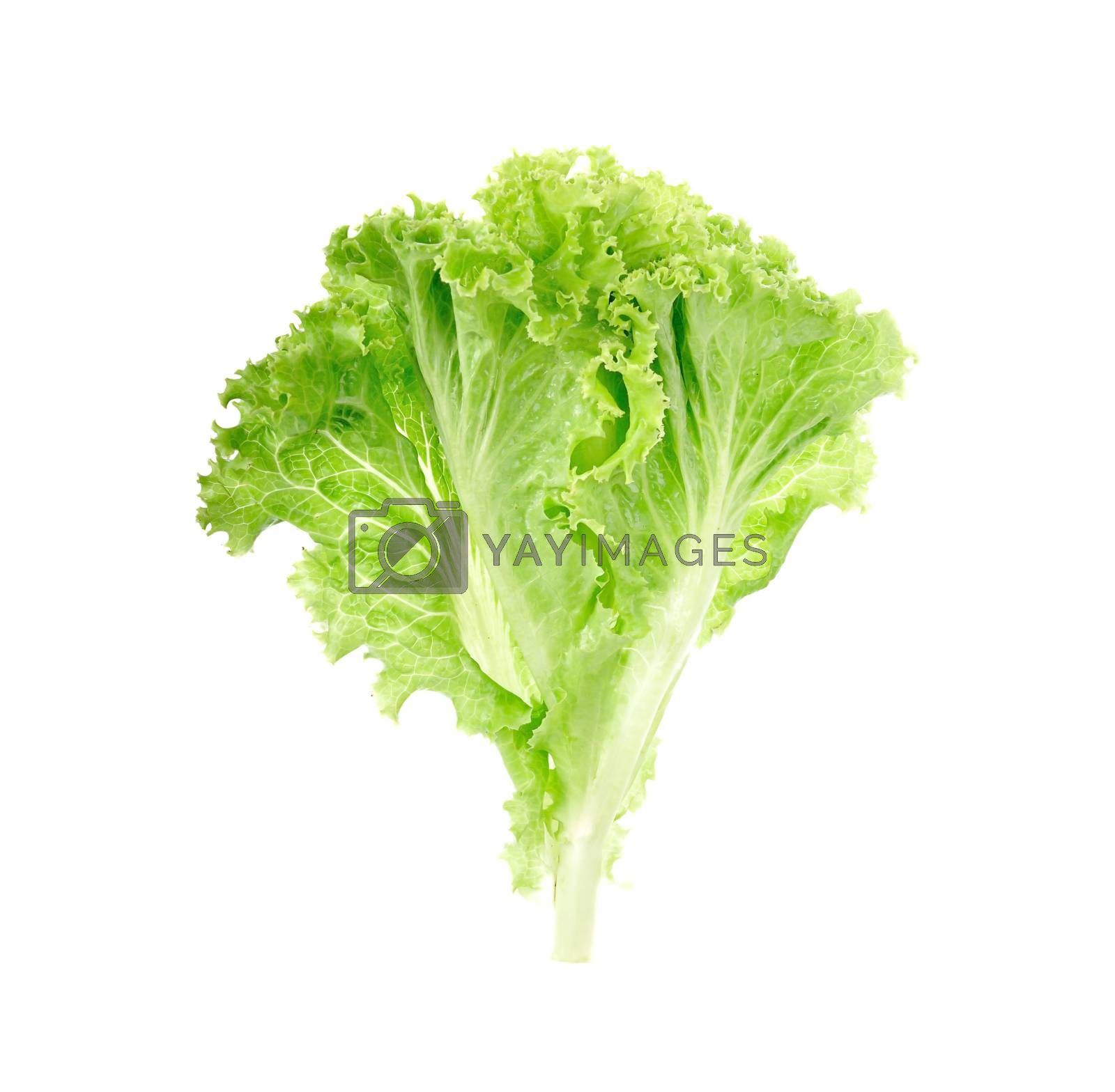 salads leaves close up isolated on white background